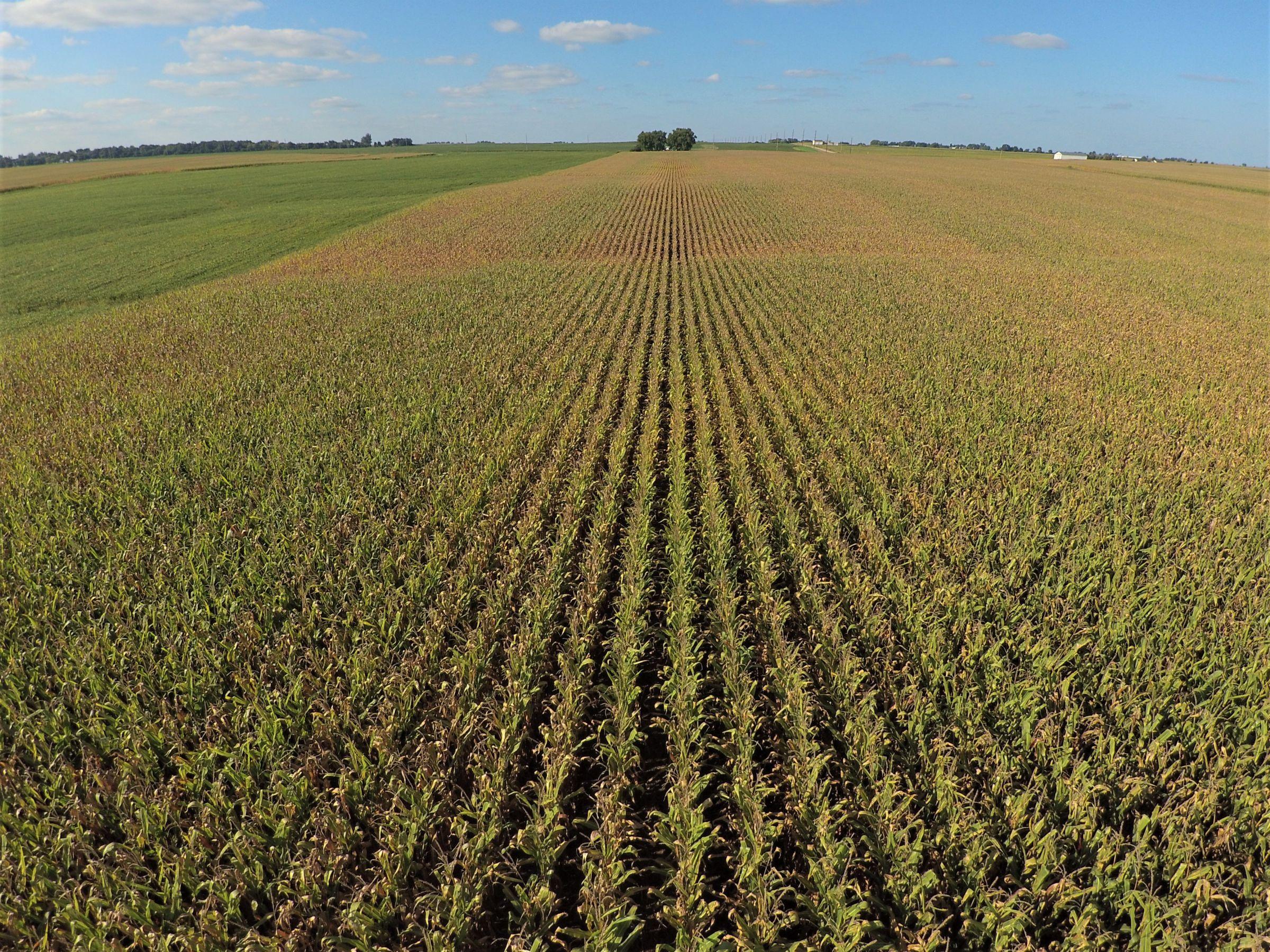 PeoplesCompany-Farmland in Hamilton County-IA-Kantor-Ave-1