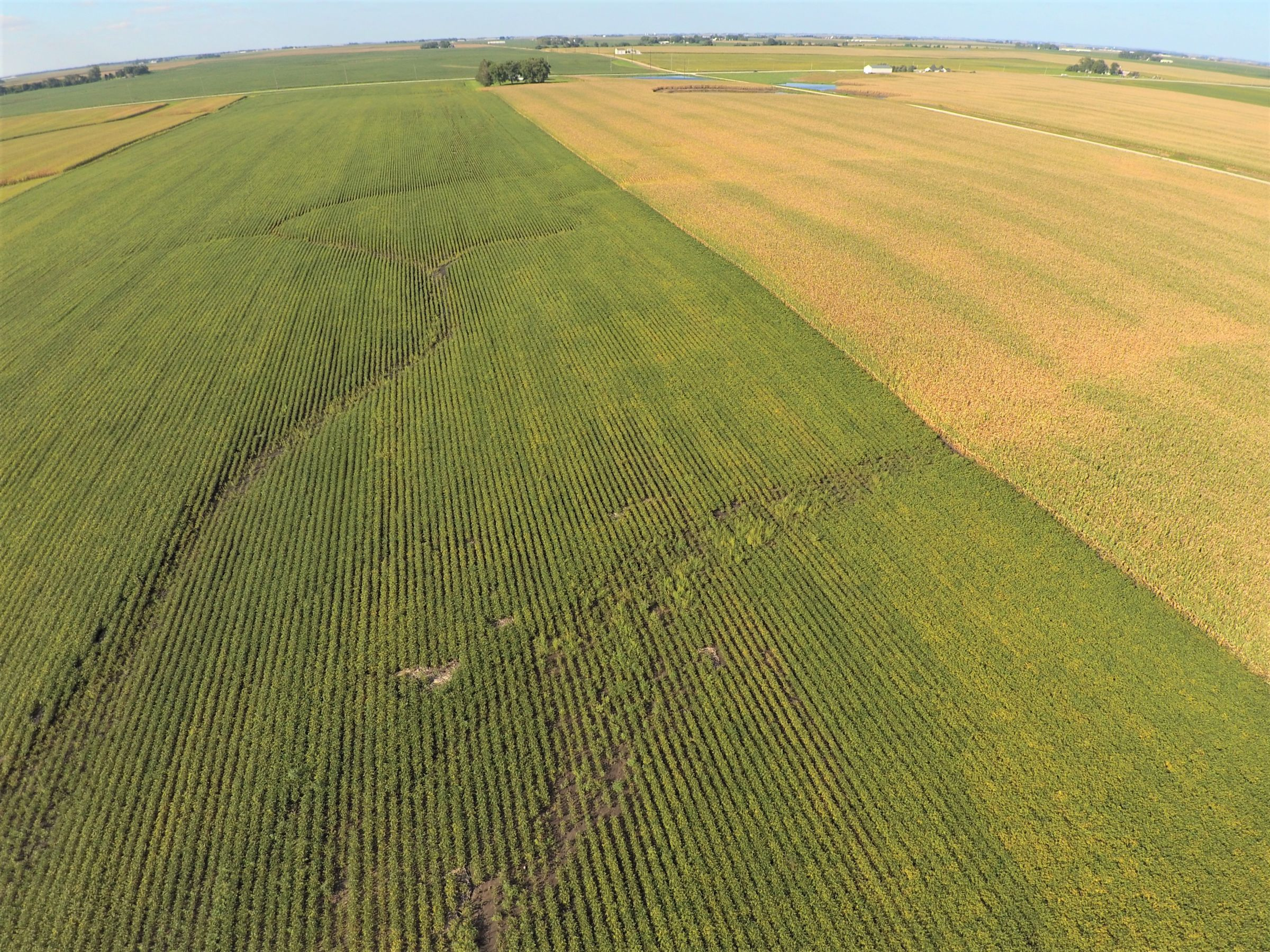 PeoplesCompany-Farmland in Hamilton County-IA-Kantor-Ave-2