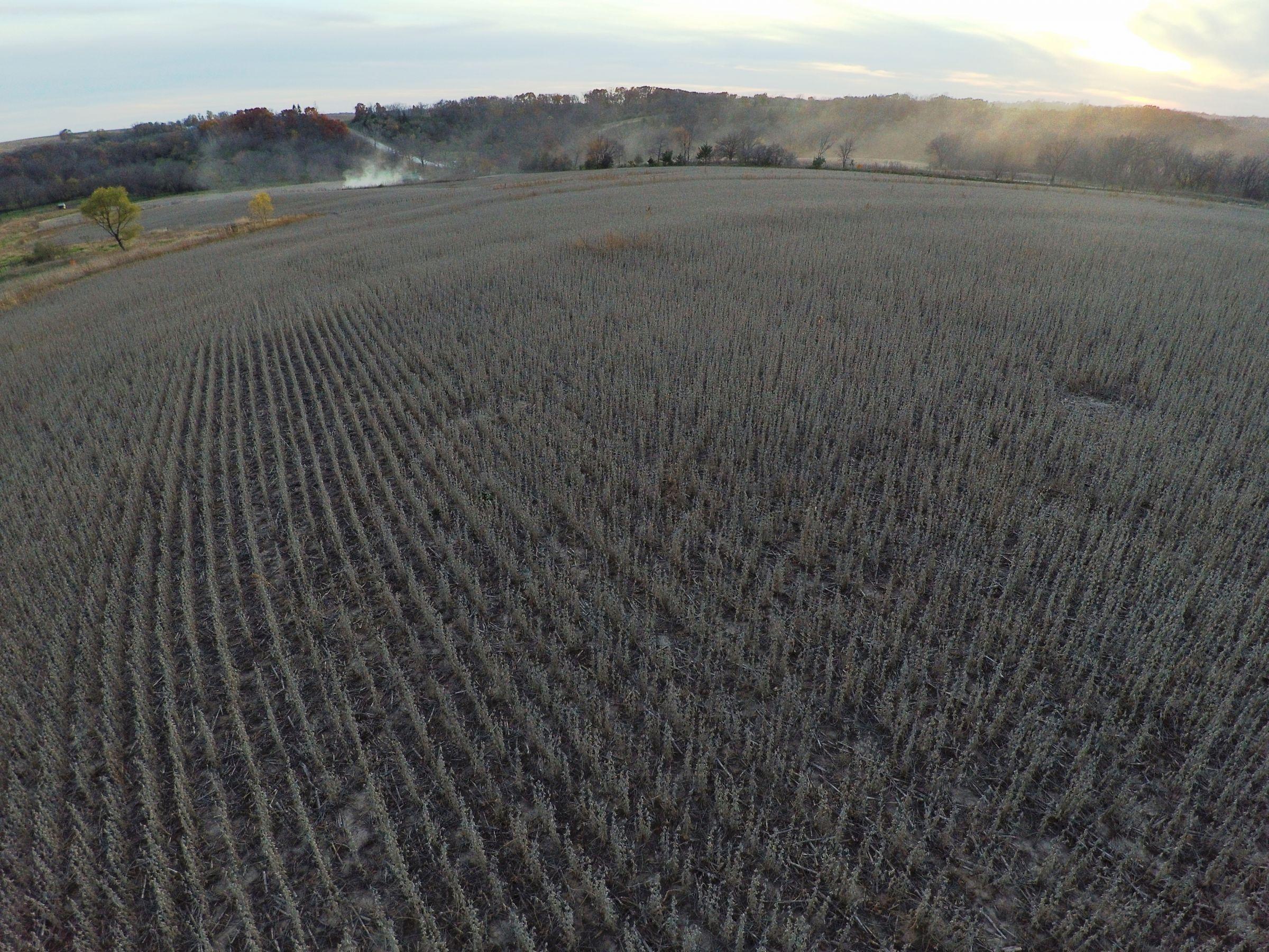Peoples Company Iowa Farmland for Sale_Warren County Iowa_17356 G58 Hwy Milo, IA 50166