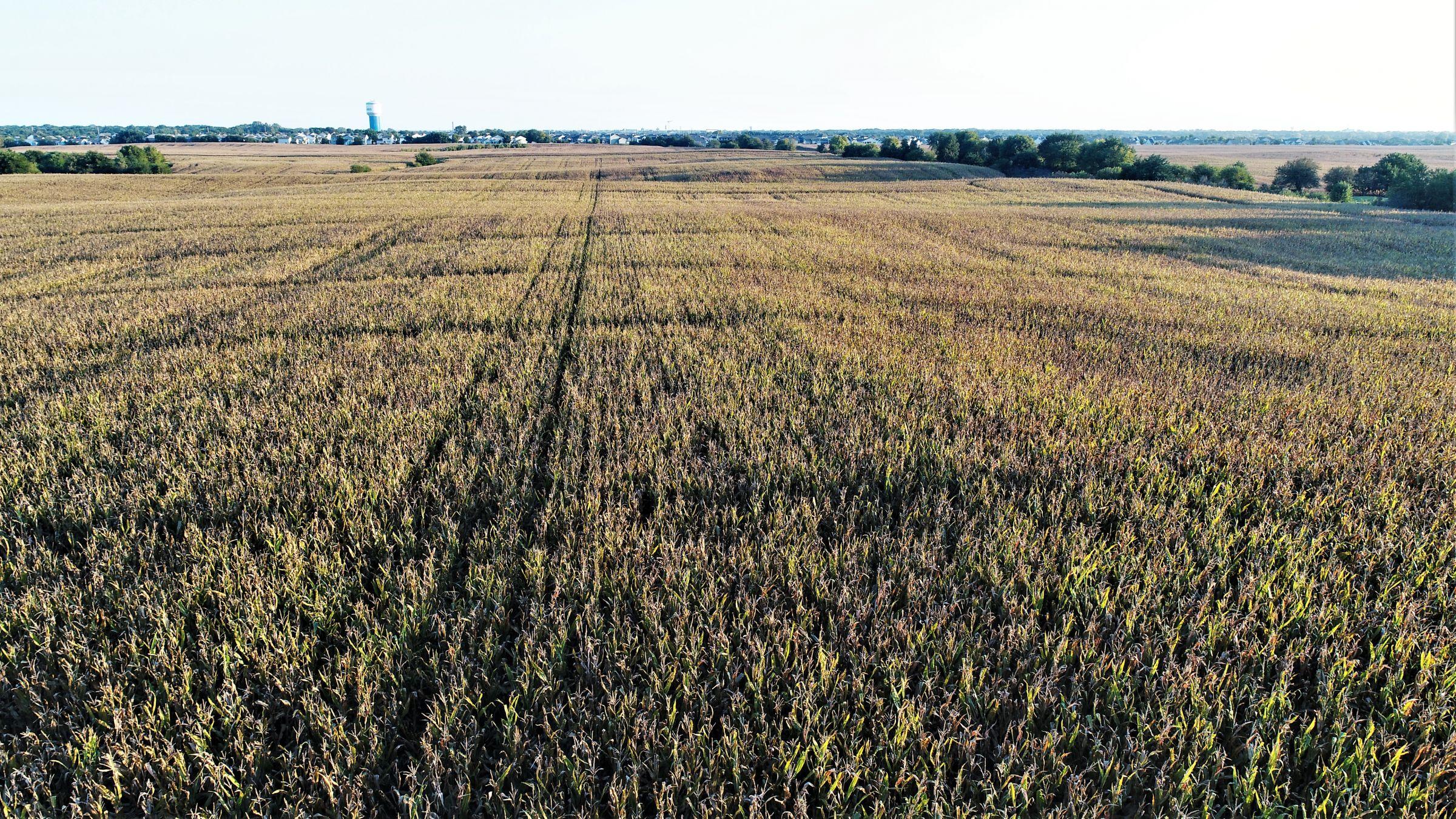14424-rose-prairie-0-2019-01-21-171630.jpg