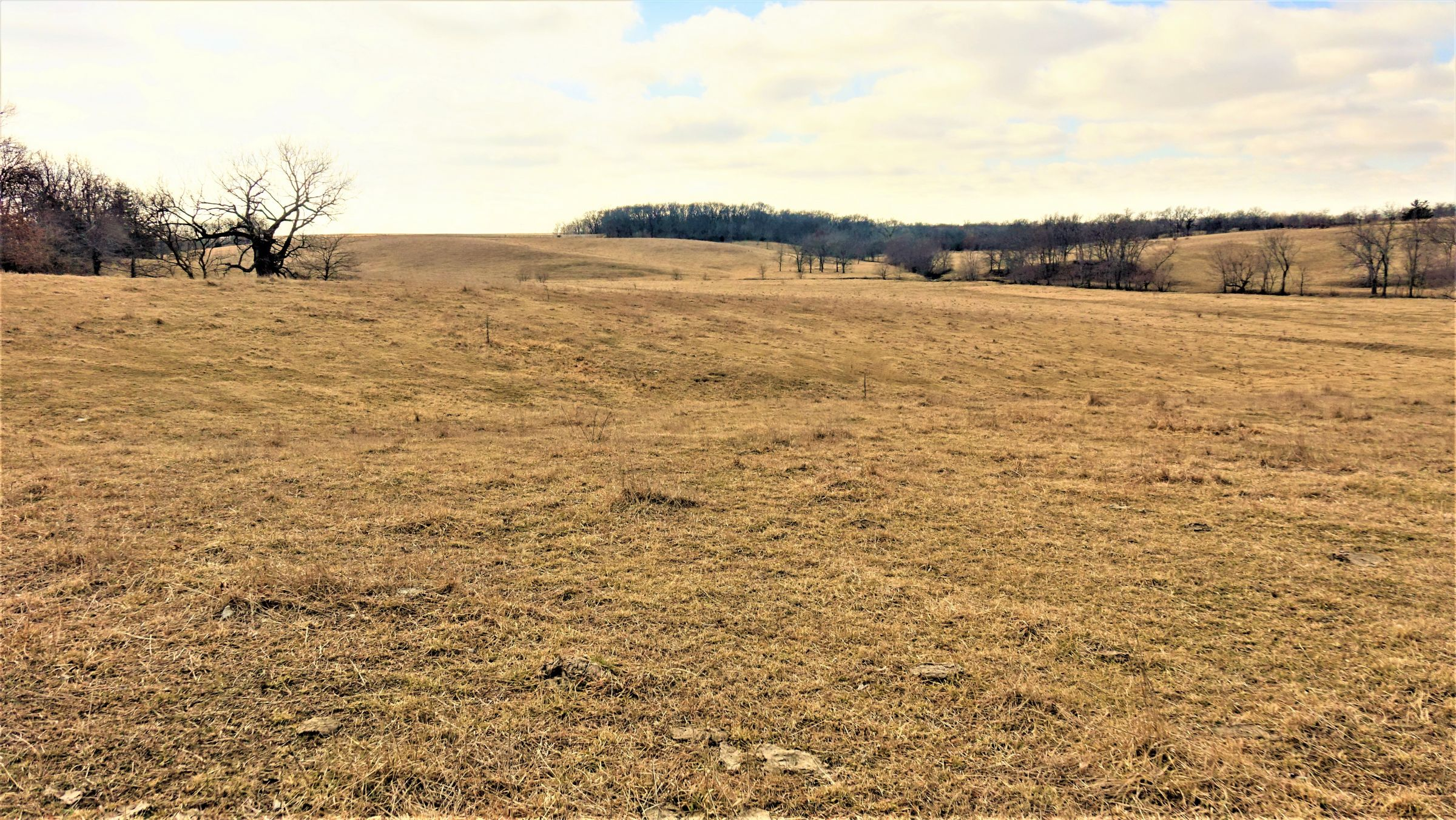 Pasture looking south