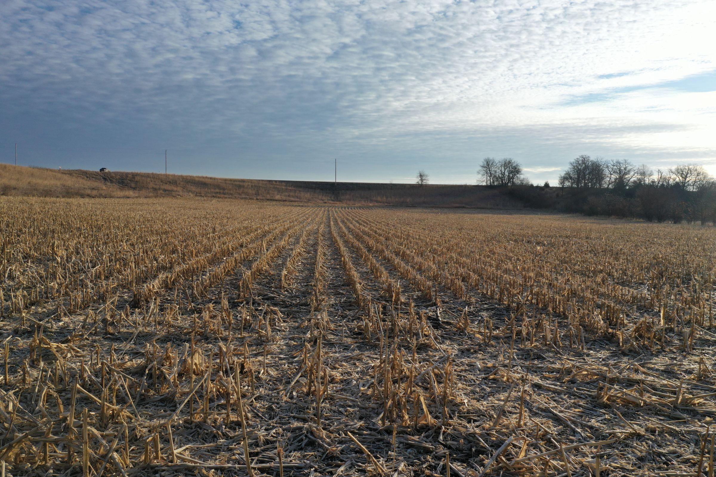Corn7 - Fall