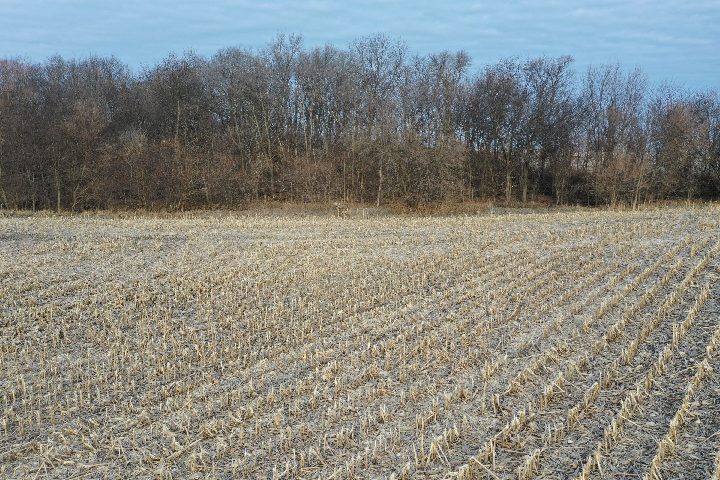 Corn9 with treeline - Fall