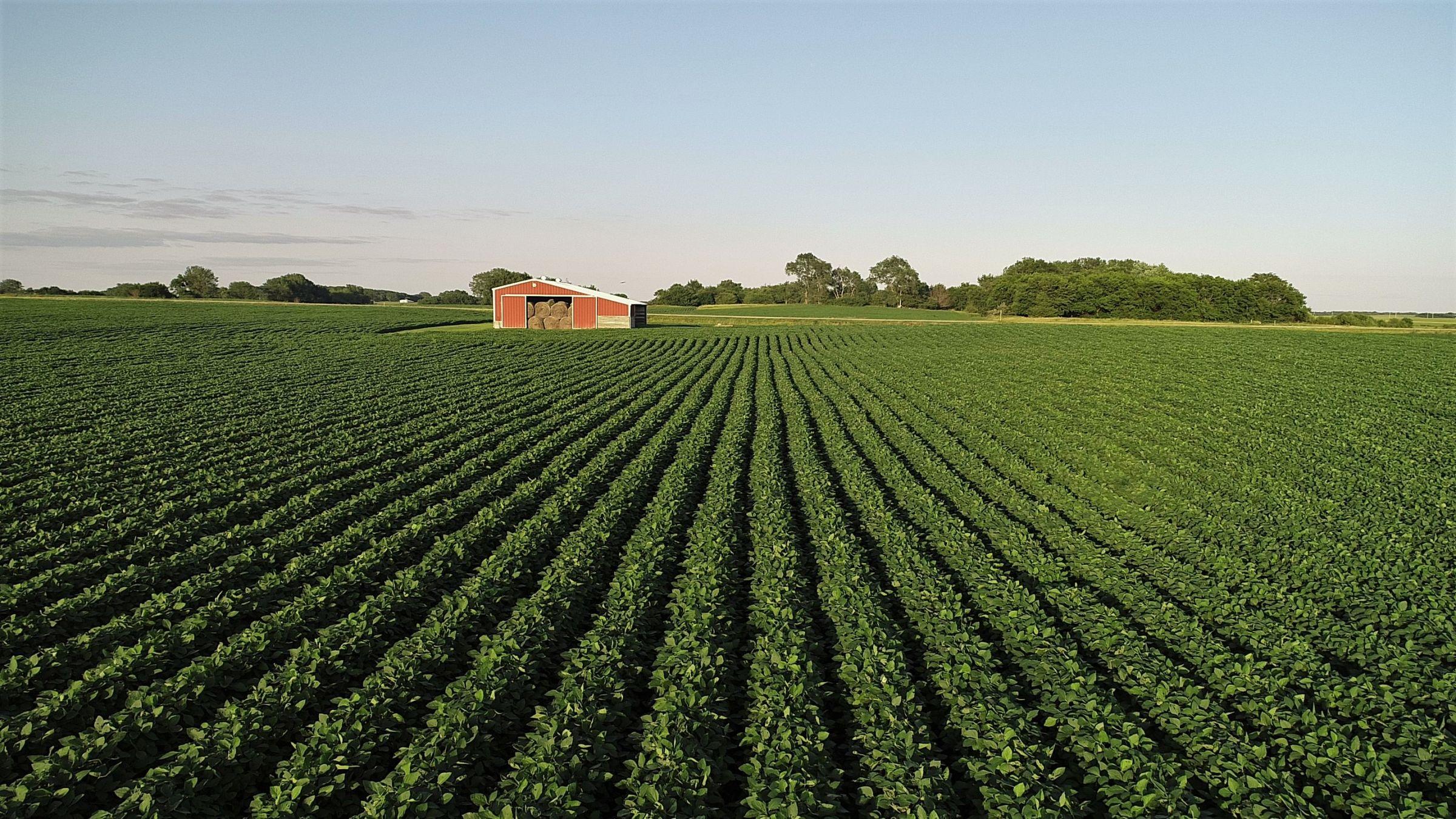 Tract 2 - Boone County Farmland