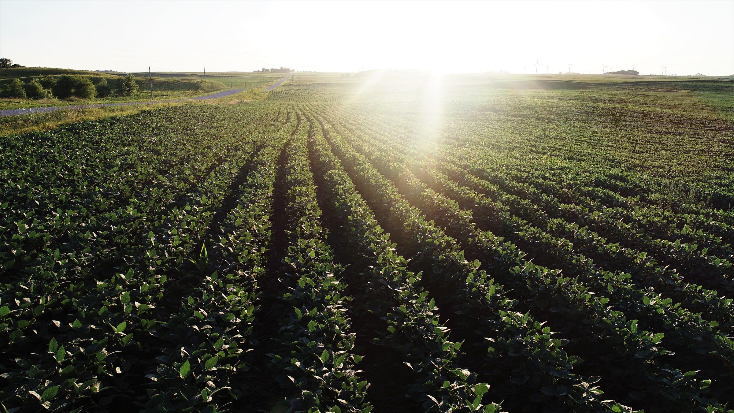 14763-cerro-gordo-farmland-for-sale-200-acres-ml-0-2019-11-07-202336.jpg