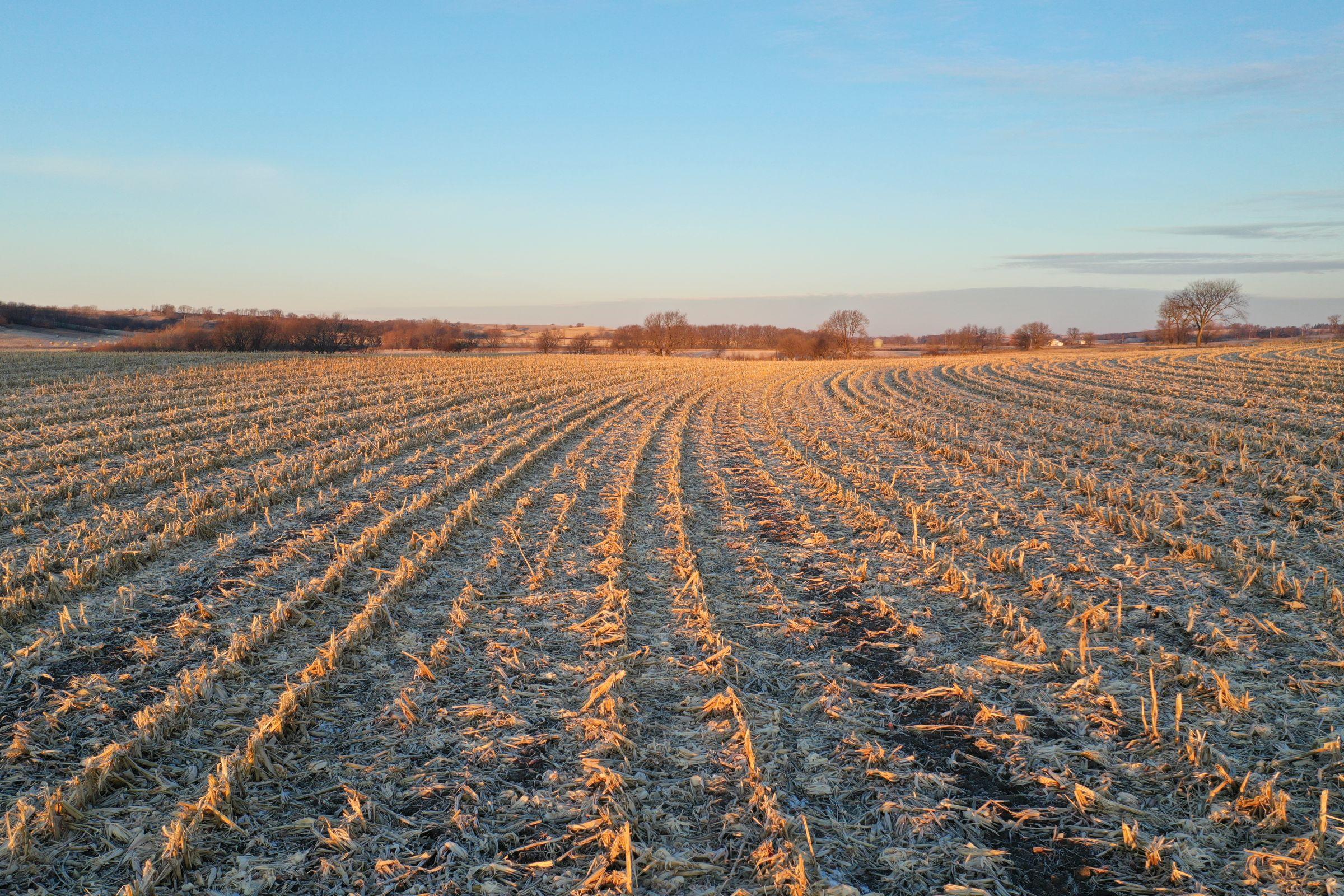 Row Crop - Corn1 in Guthrie Center, Iowa