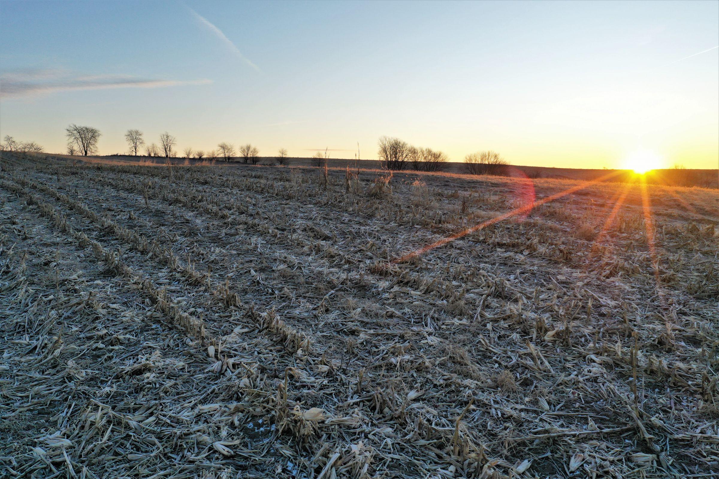 Row Crop - Corn2 in Guthrie Center, Iowa