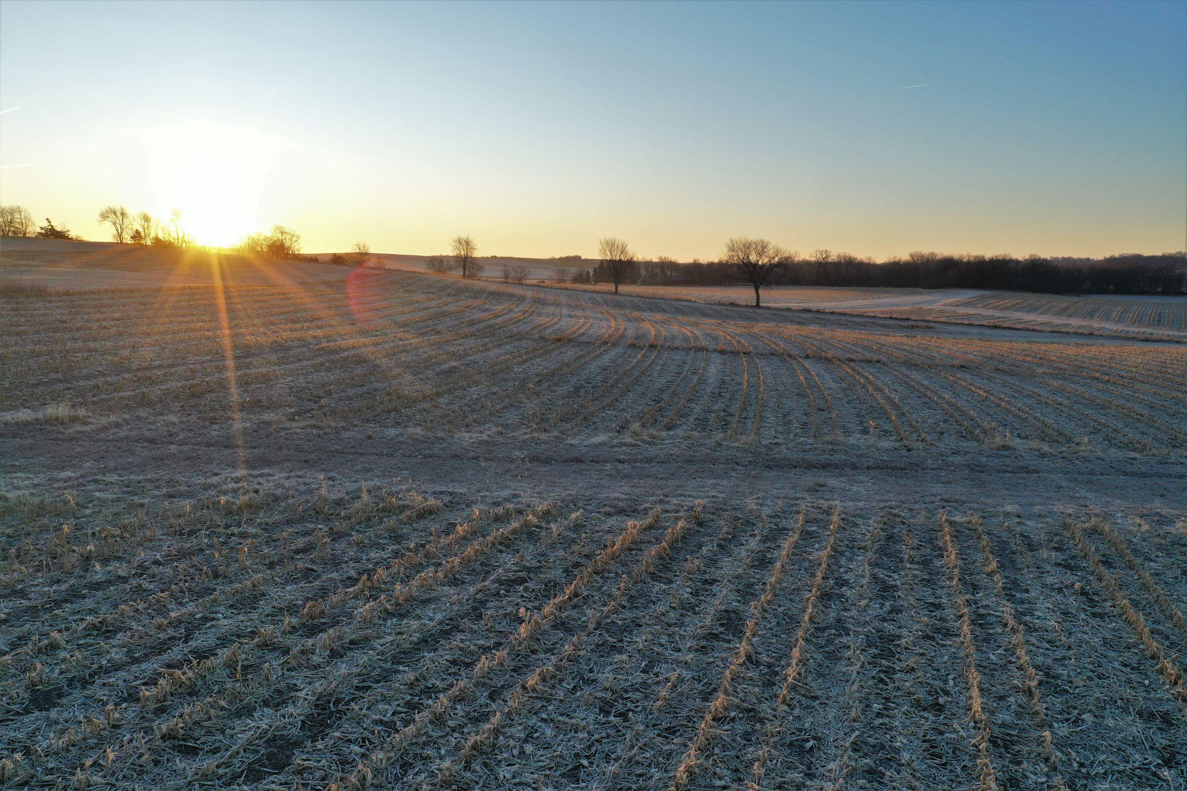 Row Crop - Corn4 in Guthrie Center, Iowa