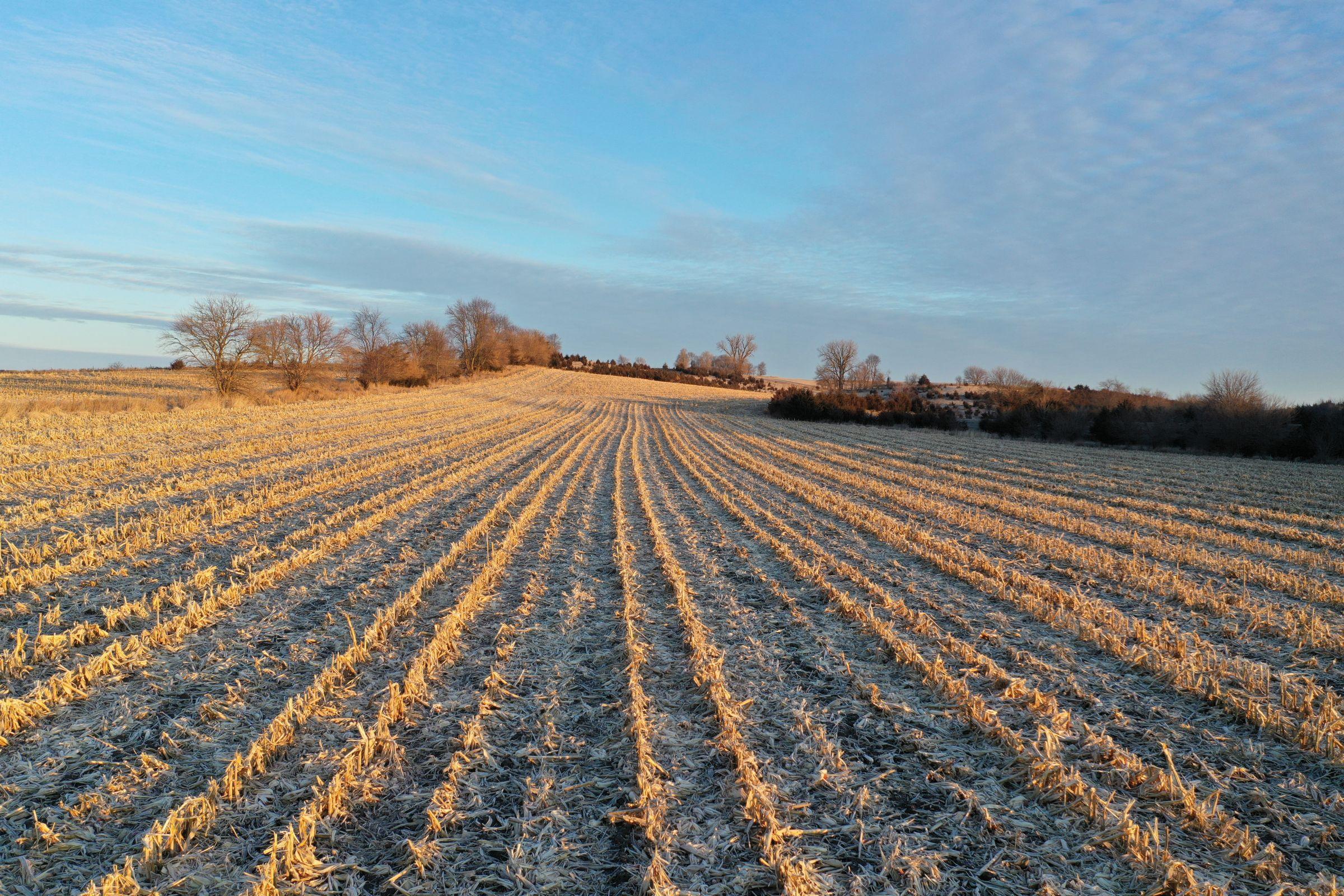 Row Crop - Corn5 in Guthrie Center, Iowa