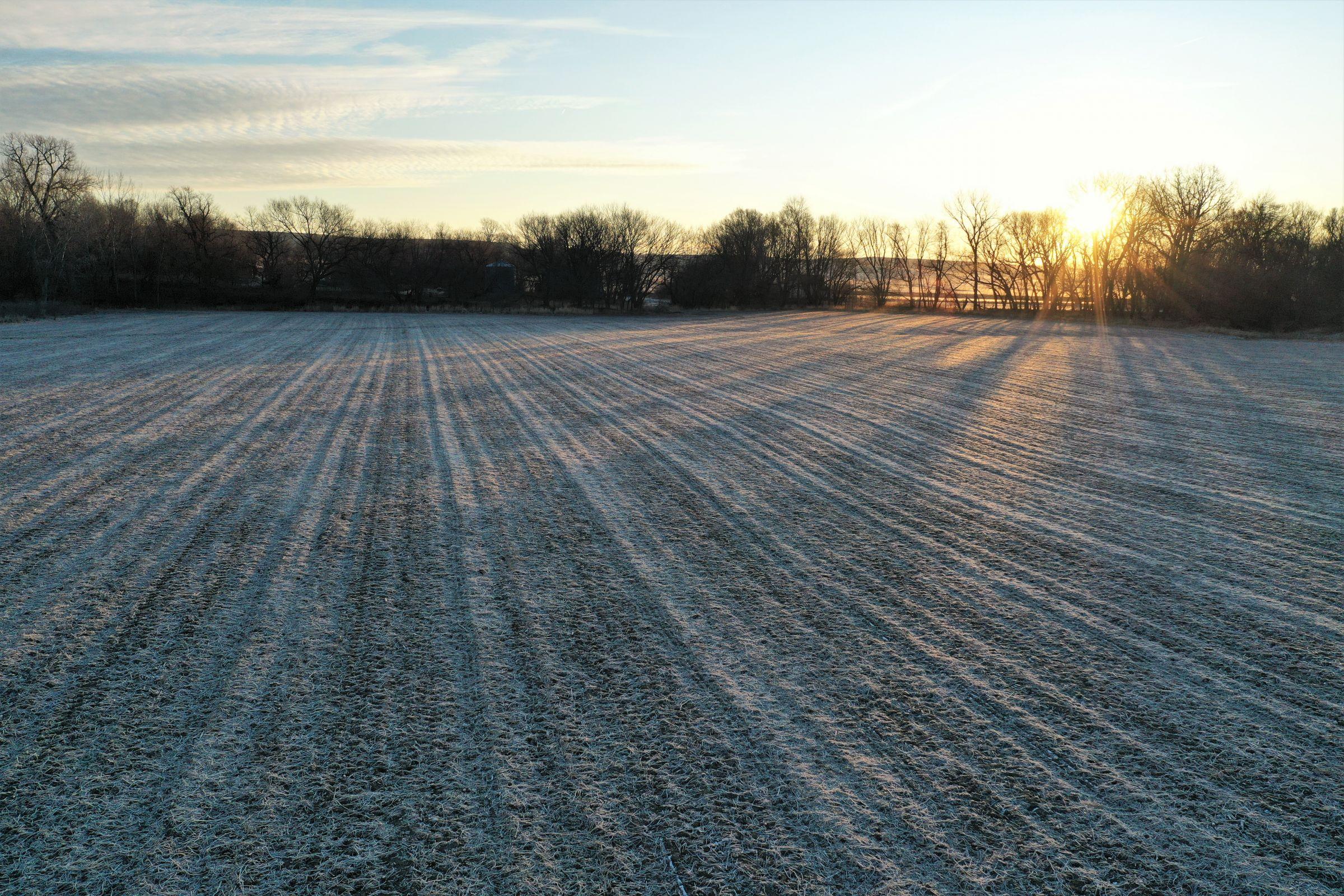 Row Crop - Soybean1 in Guthrie Center, Iowa