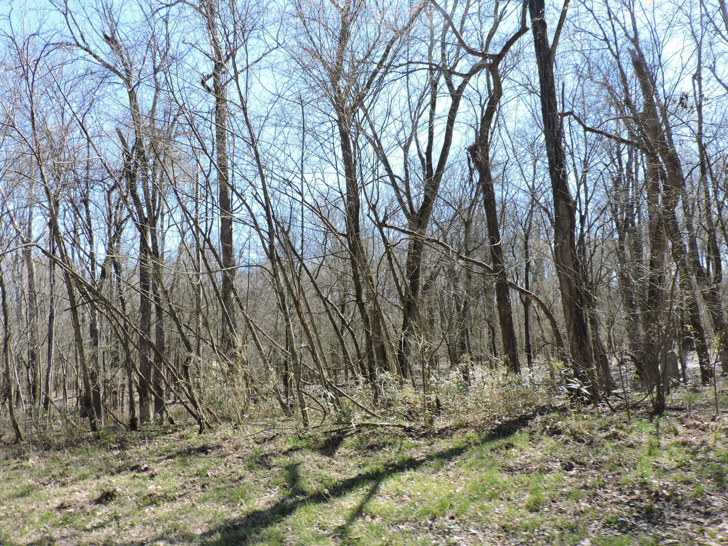 lawrence-county-arkansas-180-acres-listing-number-15014-18-2020-05-28-210451.JPG