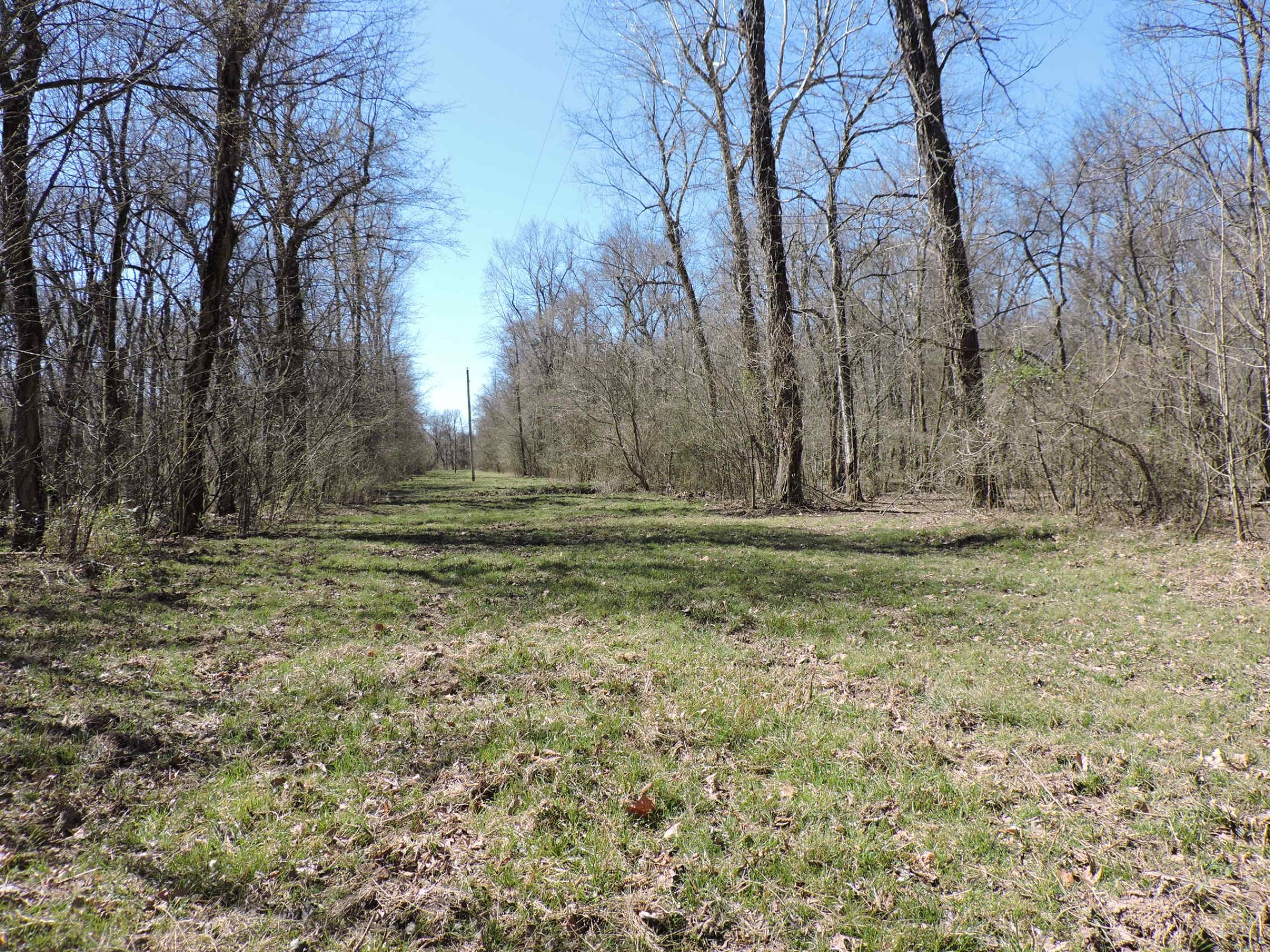 lawrence-county-arkansas-180-acres-listing-number-15014-7-2020-05-28-210443.JPG