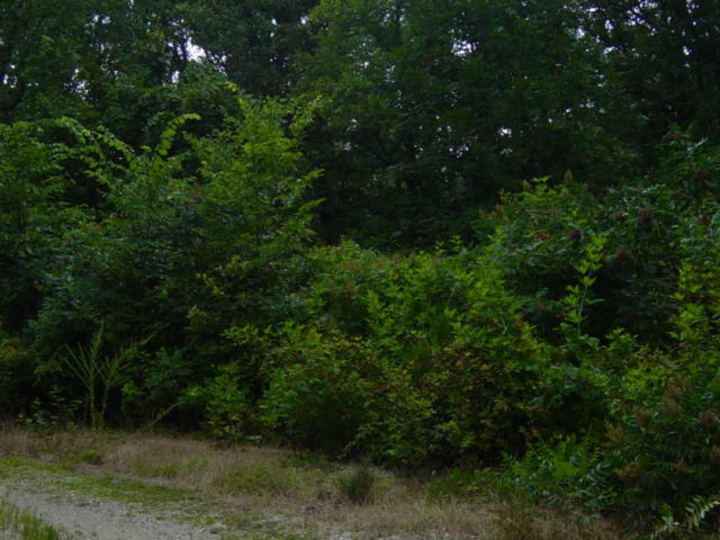 land-sharp-county-arkansas-200-acres-listing-number-15024-0-2020-06-10-145902.JPG