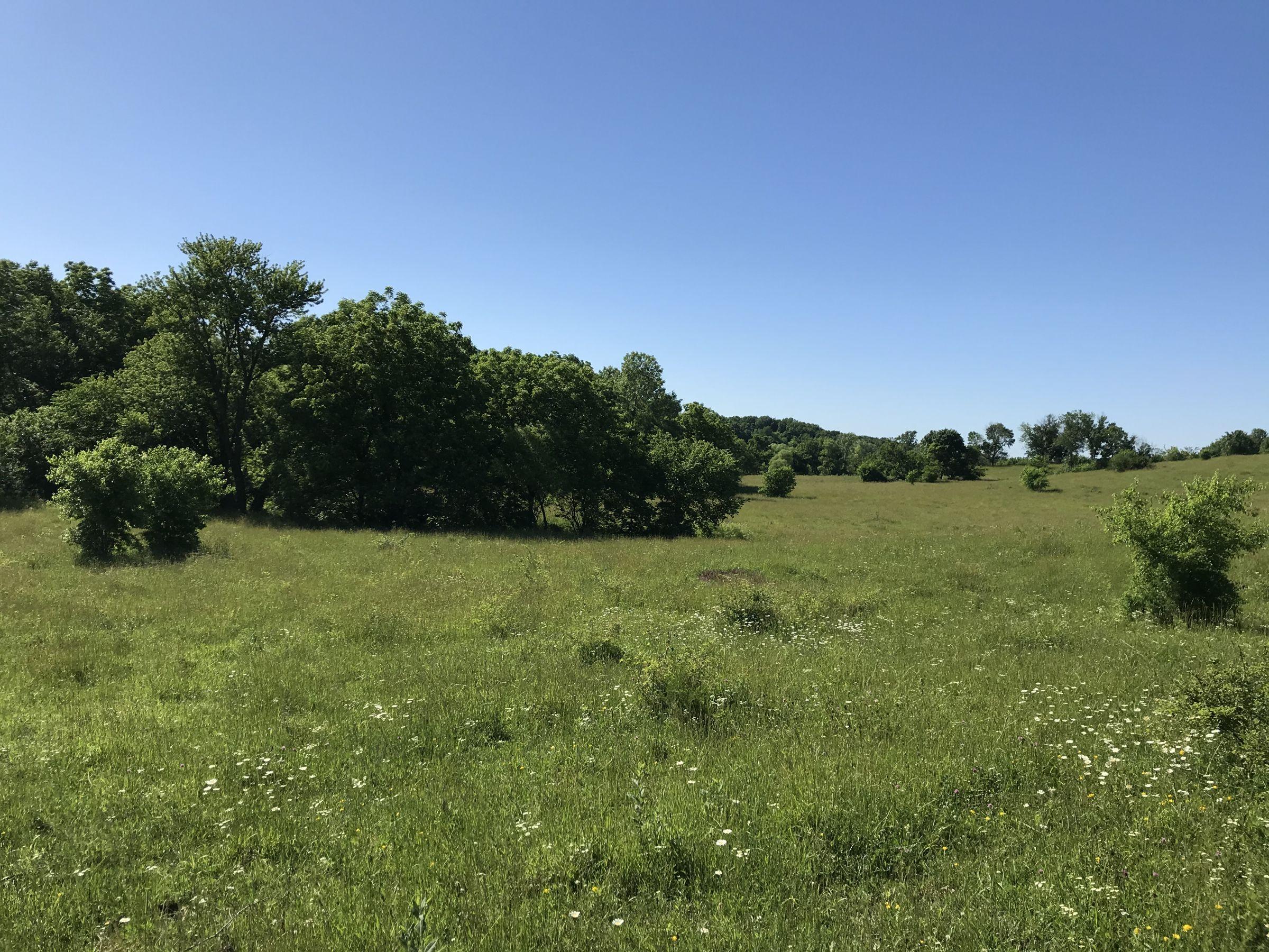 land-warren-county-iowa-60-acres-listing-number-15033-1-2020-06-14-151752.JPG
