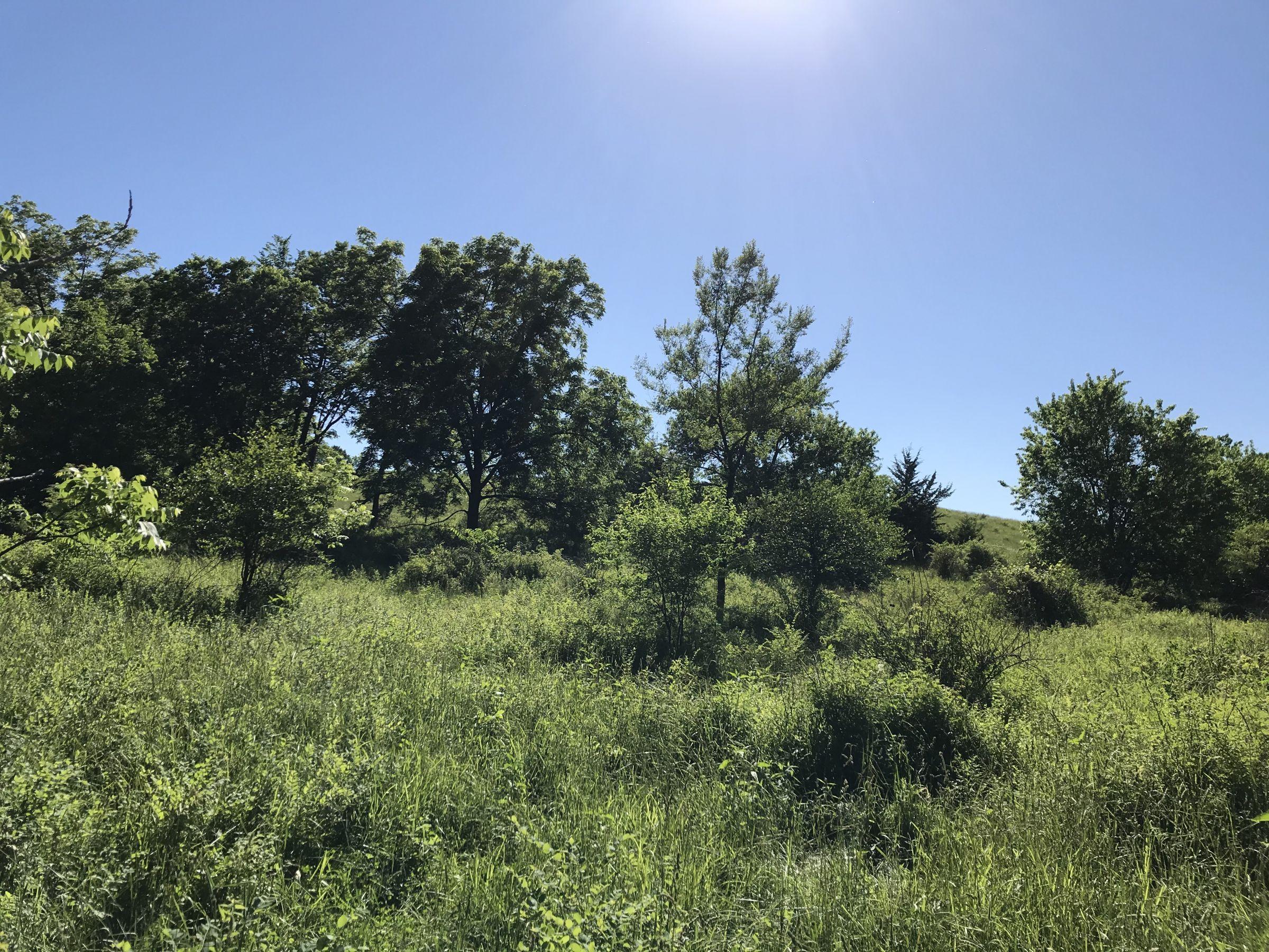 land-warren-county-iowa-60-acres-listing-number-15033-2-2020-06-14-151753.JPG