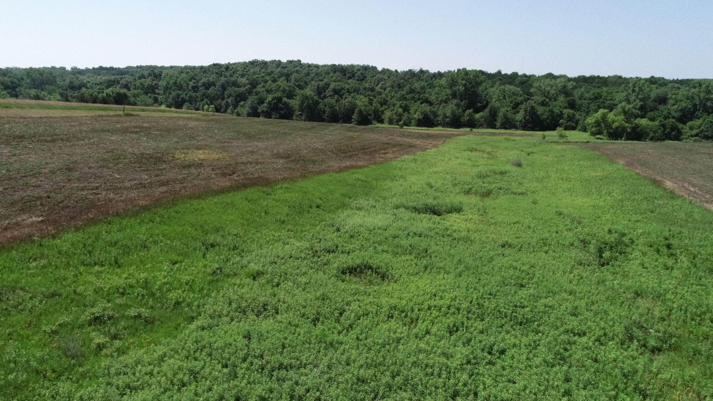 land-decatur-county-iowa-40-acres-listing-number-15069-3-2020-07-13-190428.JPG