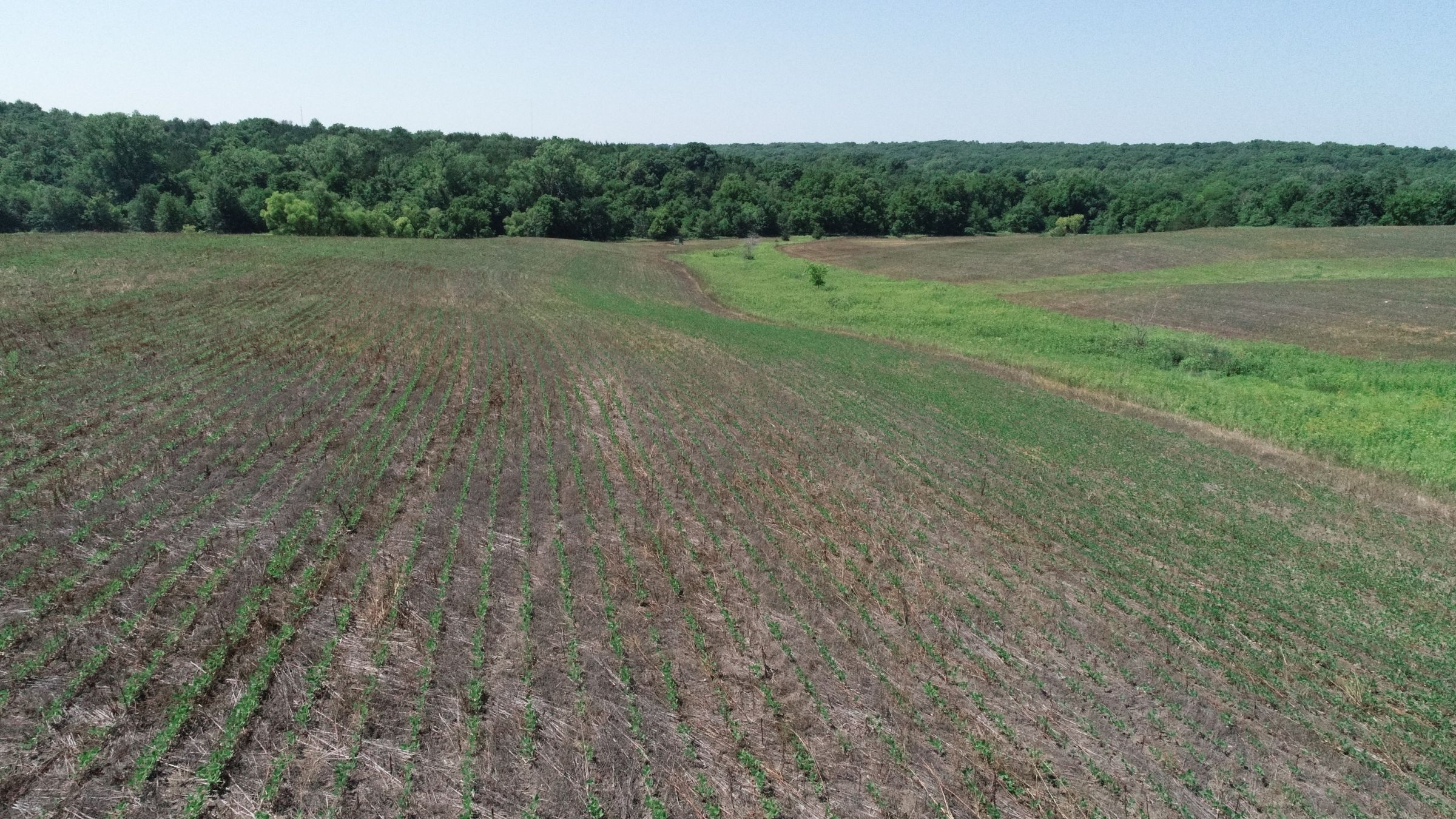 land-decatur-county-iowa-40-acres-listing-number-15069-4-2020-07-13-190430.JPG