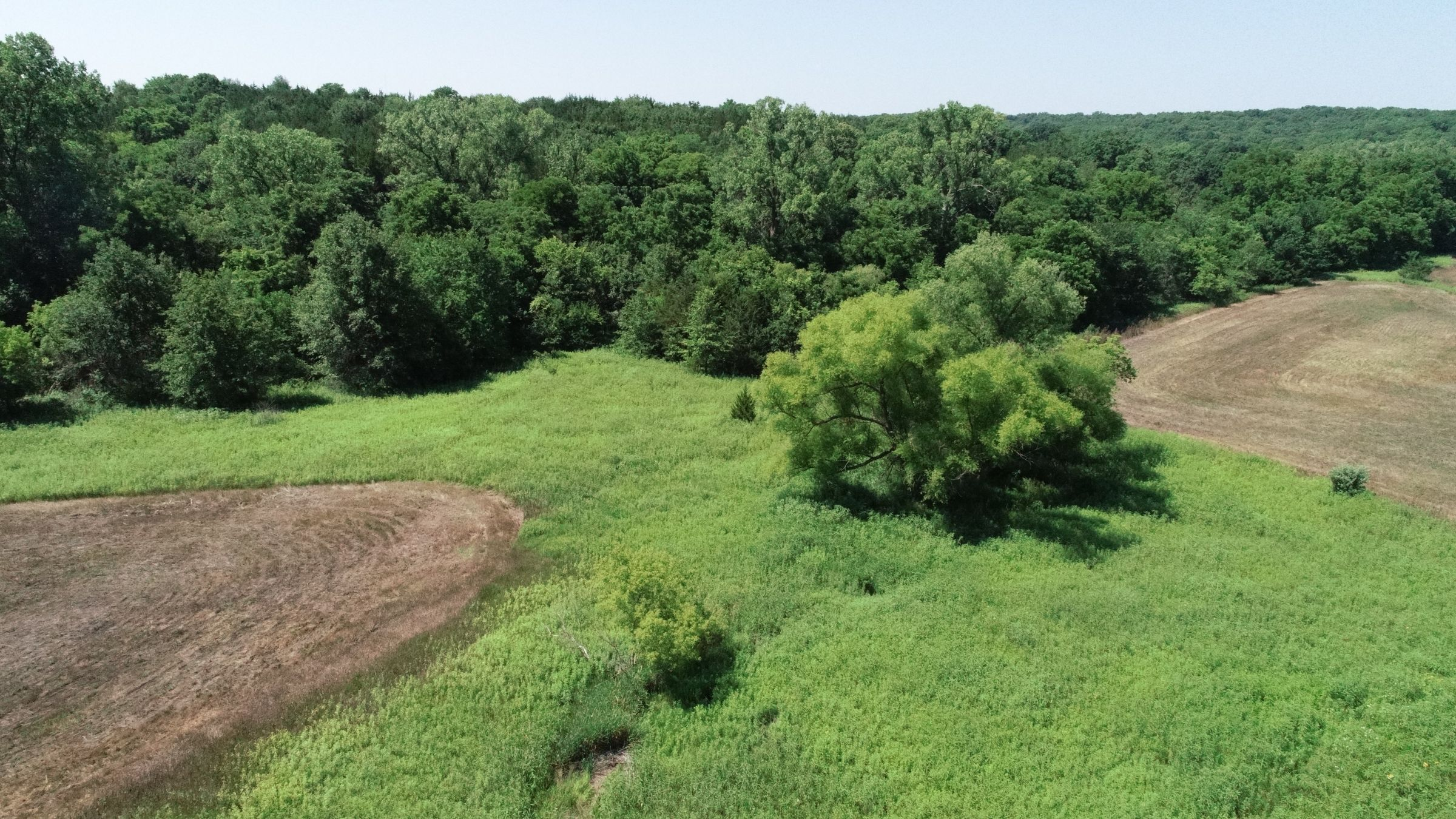 land-decatur-county-iowa-40-acres-listing-number-15069-6-2020-07-13-190432.JPG