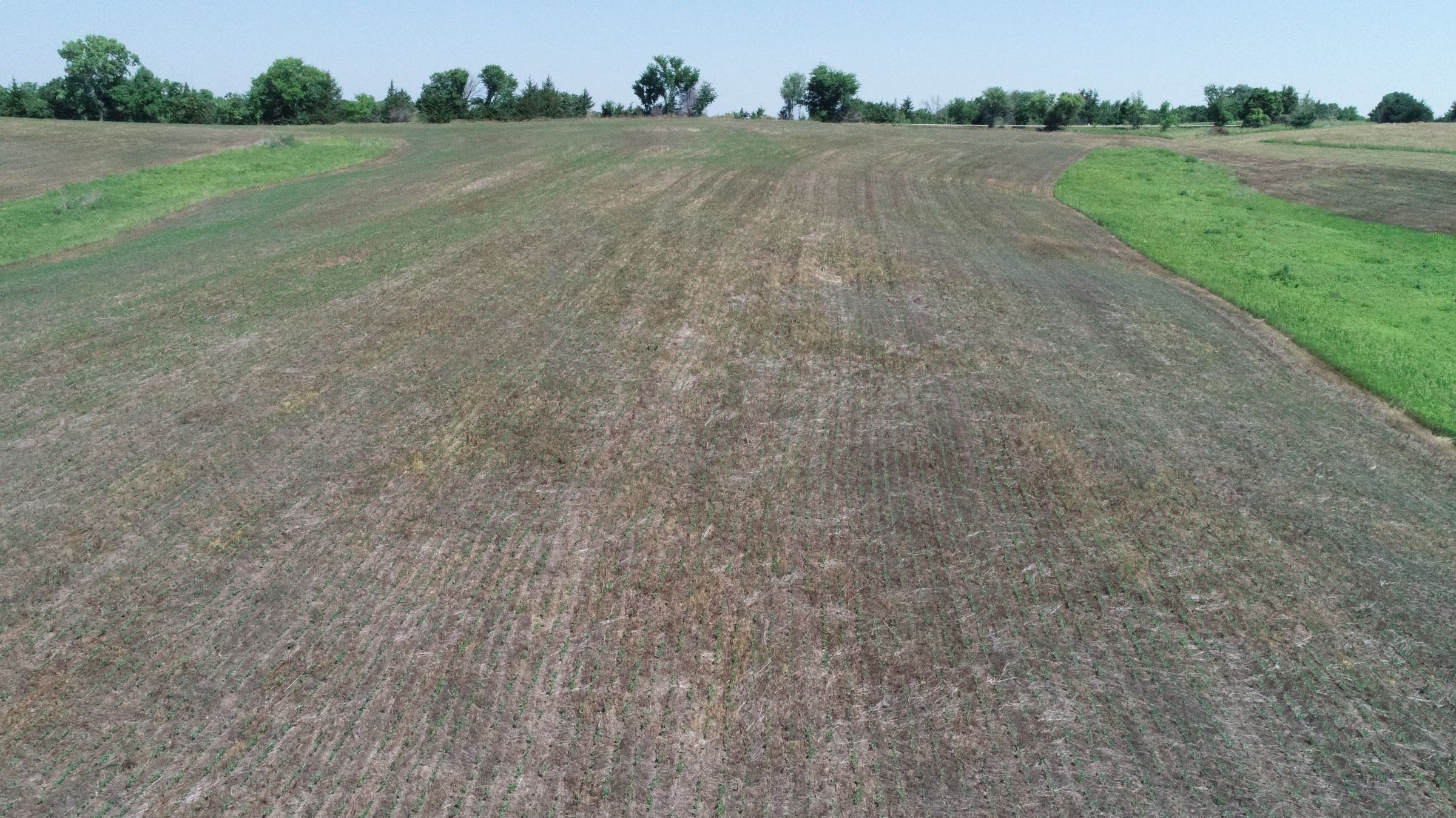 land-decatur-county-iowa-40-acres-listing-number-15069-7-2020-07-13-190434.JPG
