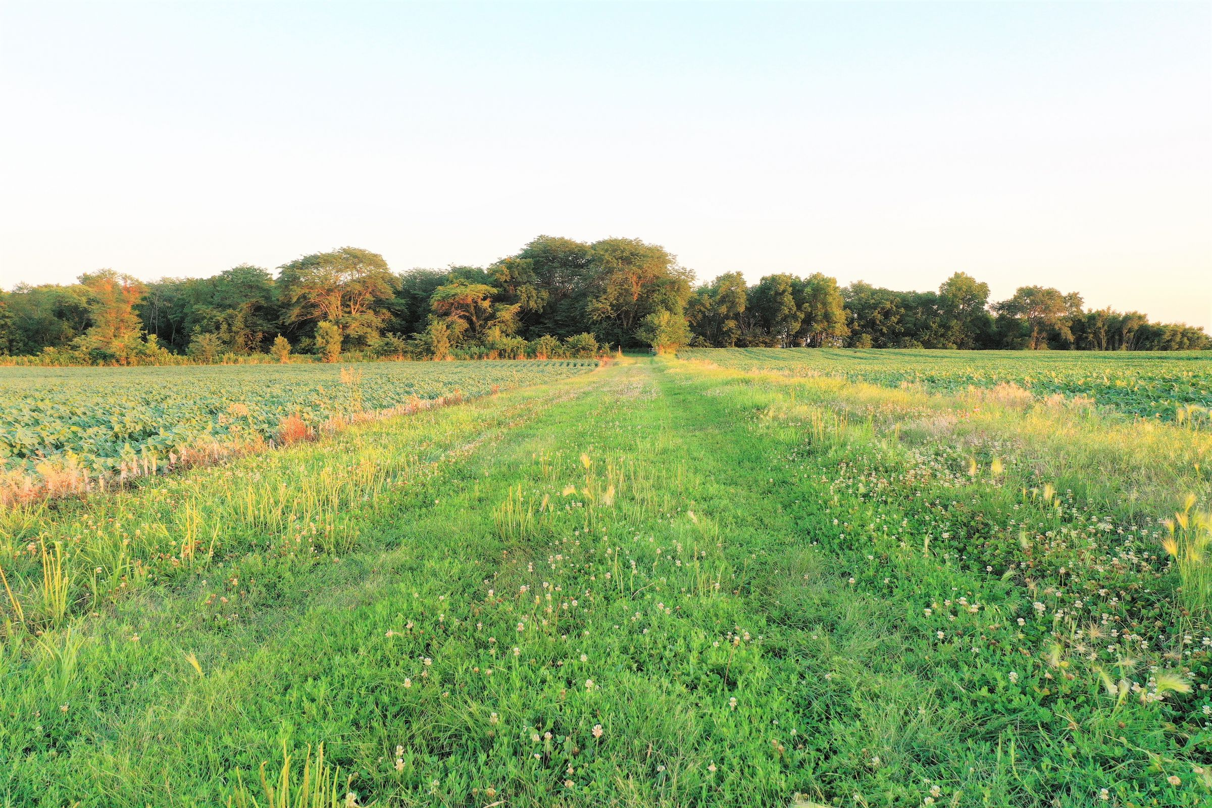 land-dallas-county-iowa-55-acres-listing-number-15081-7-2020-07-23-162429.JPG
