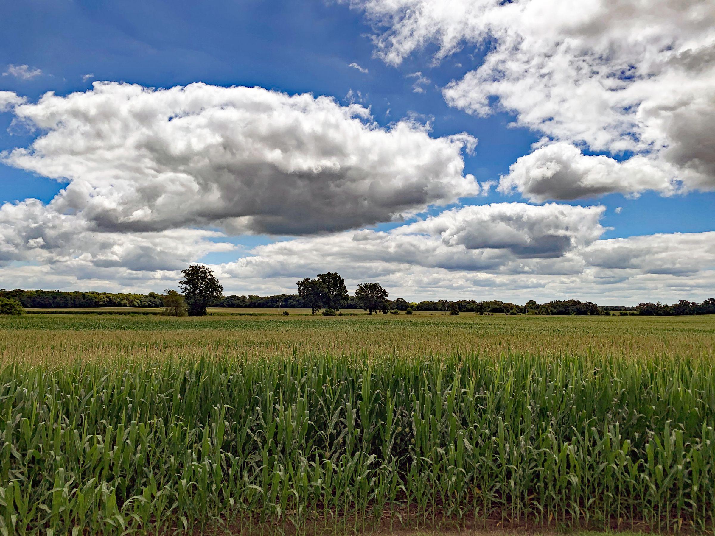 land-winnebago-county-illinois-127-acres-listing-number-15094-3-2020-08-03-160424.jpg
