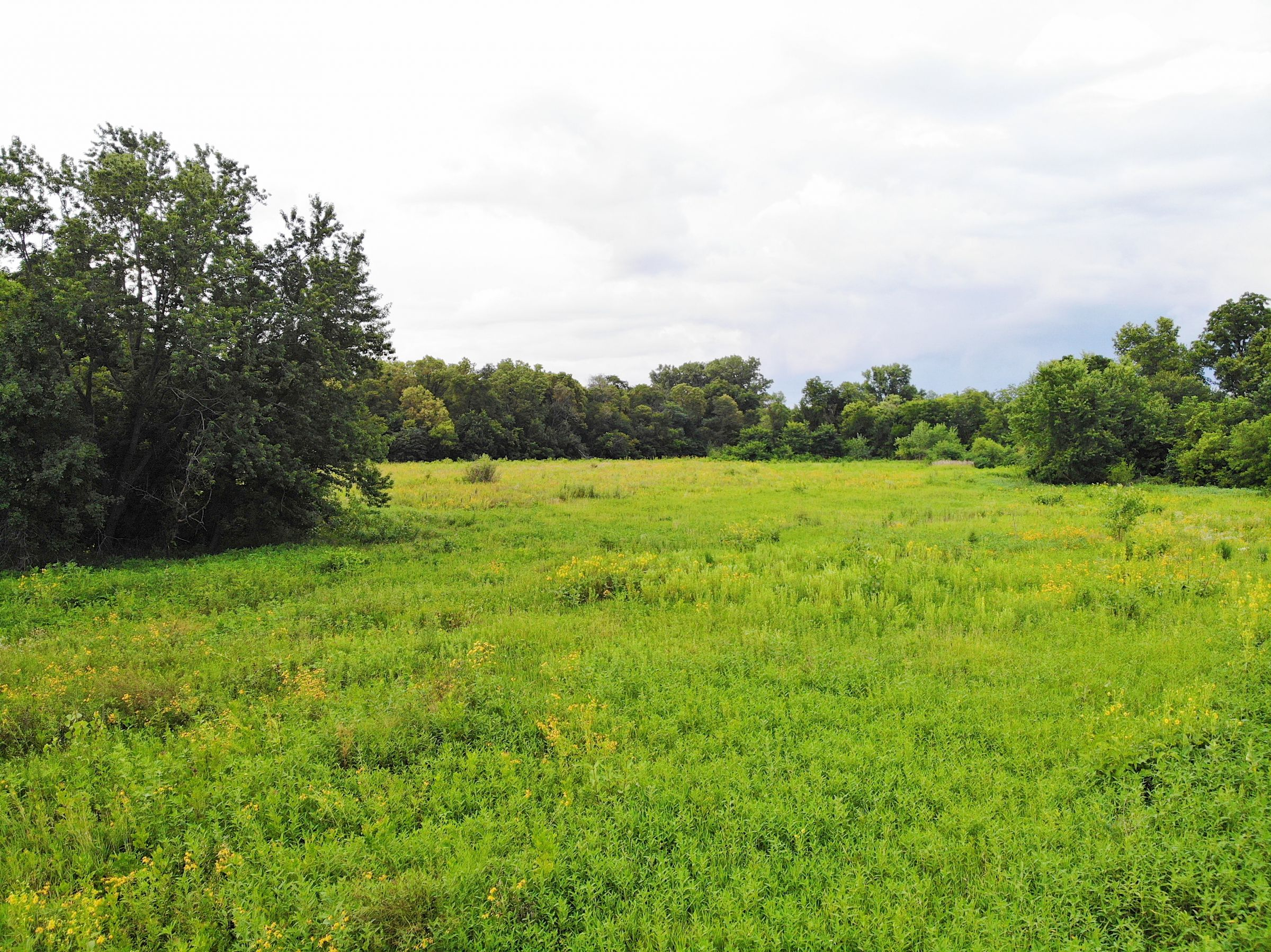 land-warren-county-iowa-38-acres-listing-number-15098-0-2020-08-01-153747.jpg