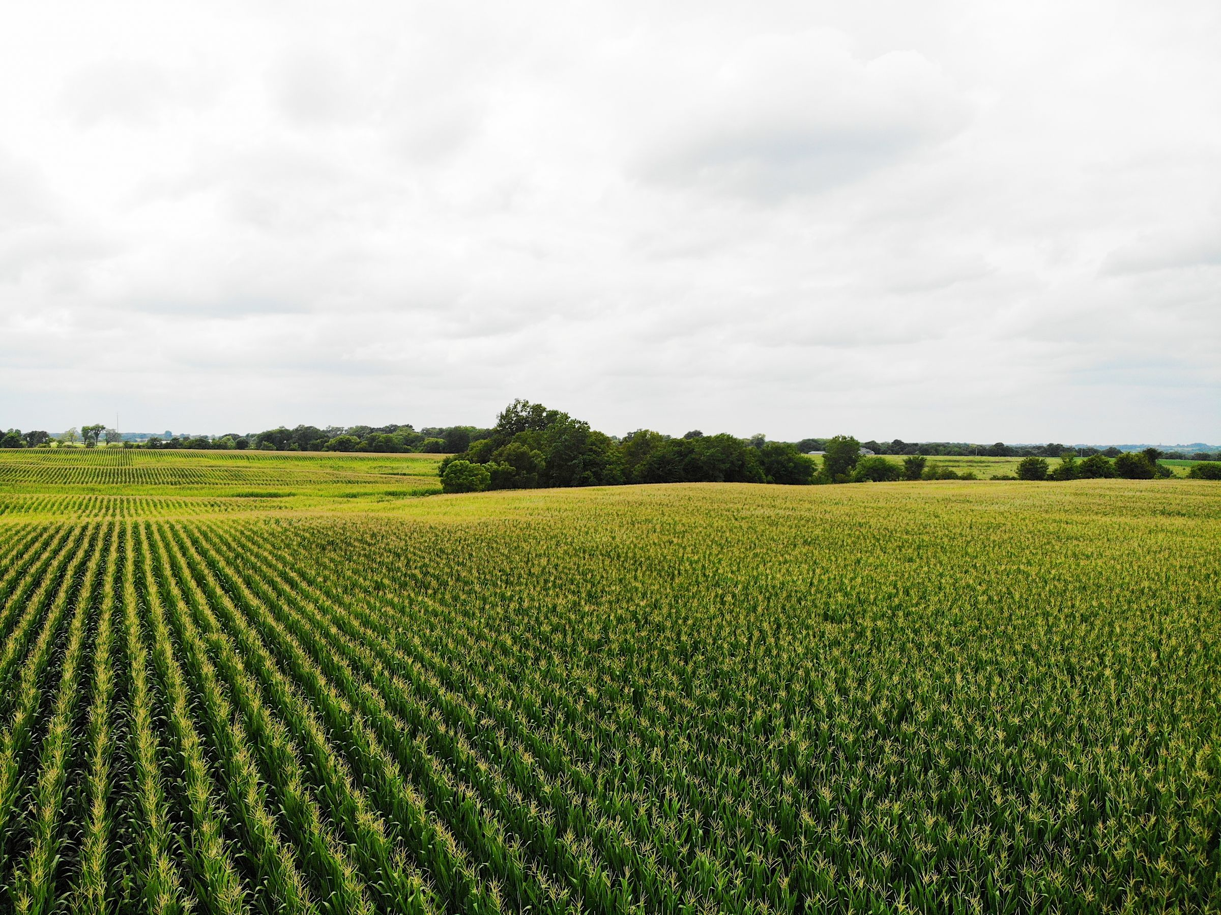 land-clarke-county-iowa-72-acres-listing-number-15106-2-2020-08-09-034302.jpg