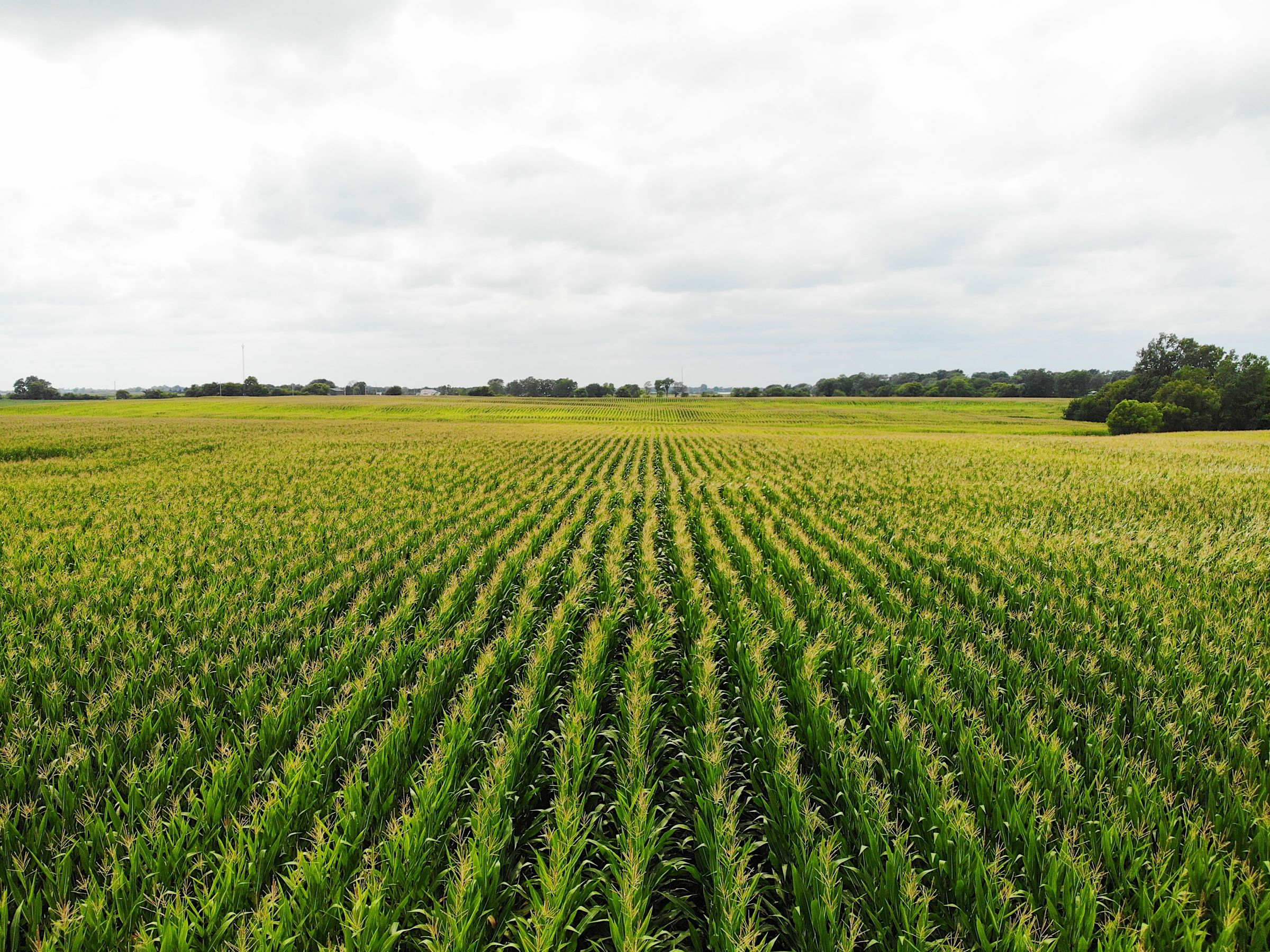 land-clarke-county-iowa-72-acres-listing-number-15106-3-2020-08-09-034303.jpg
