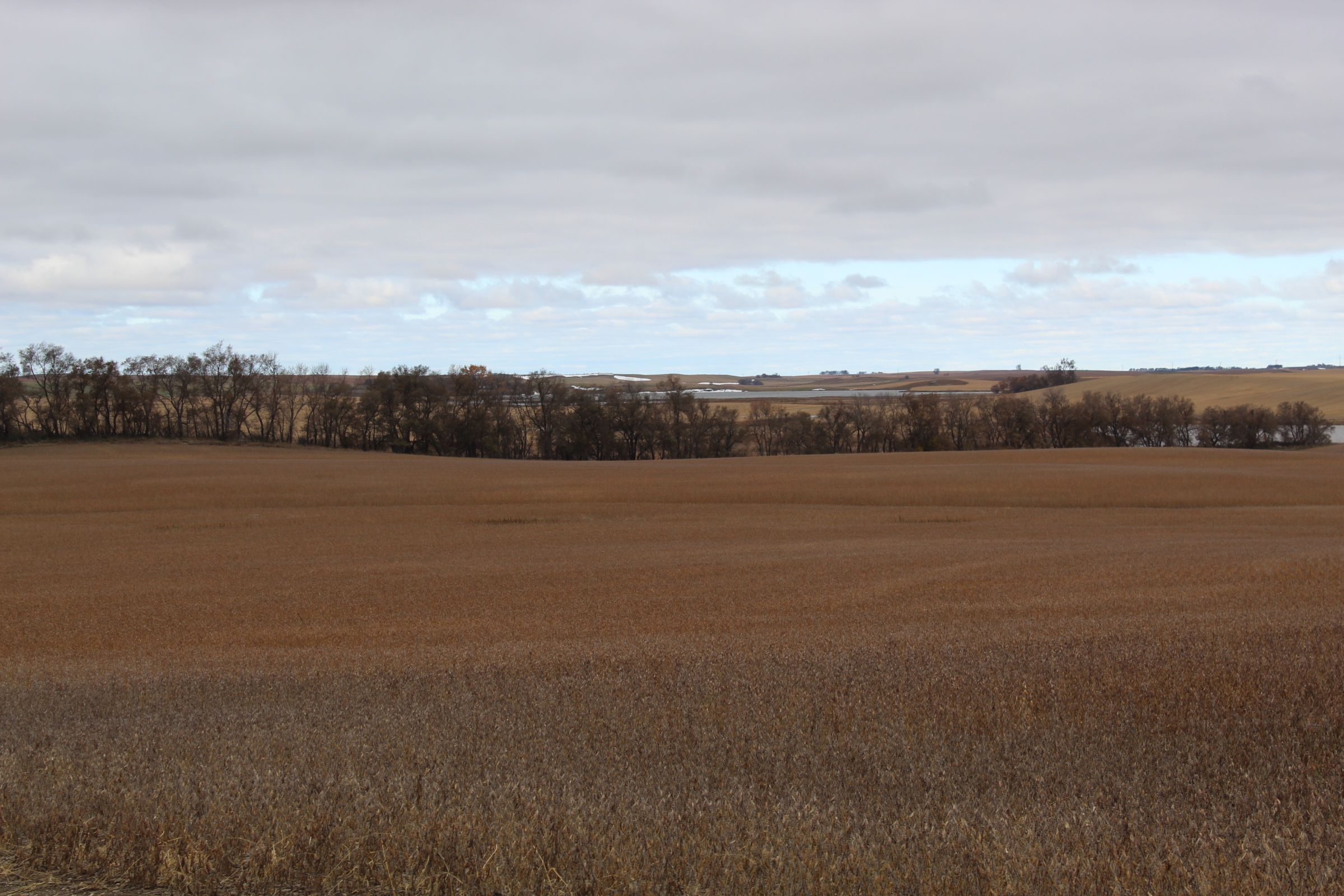 stutsman-county-north-dakota-312-acres-listing-number-15116-0-2020-08-12-141904.JPG