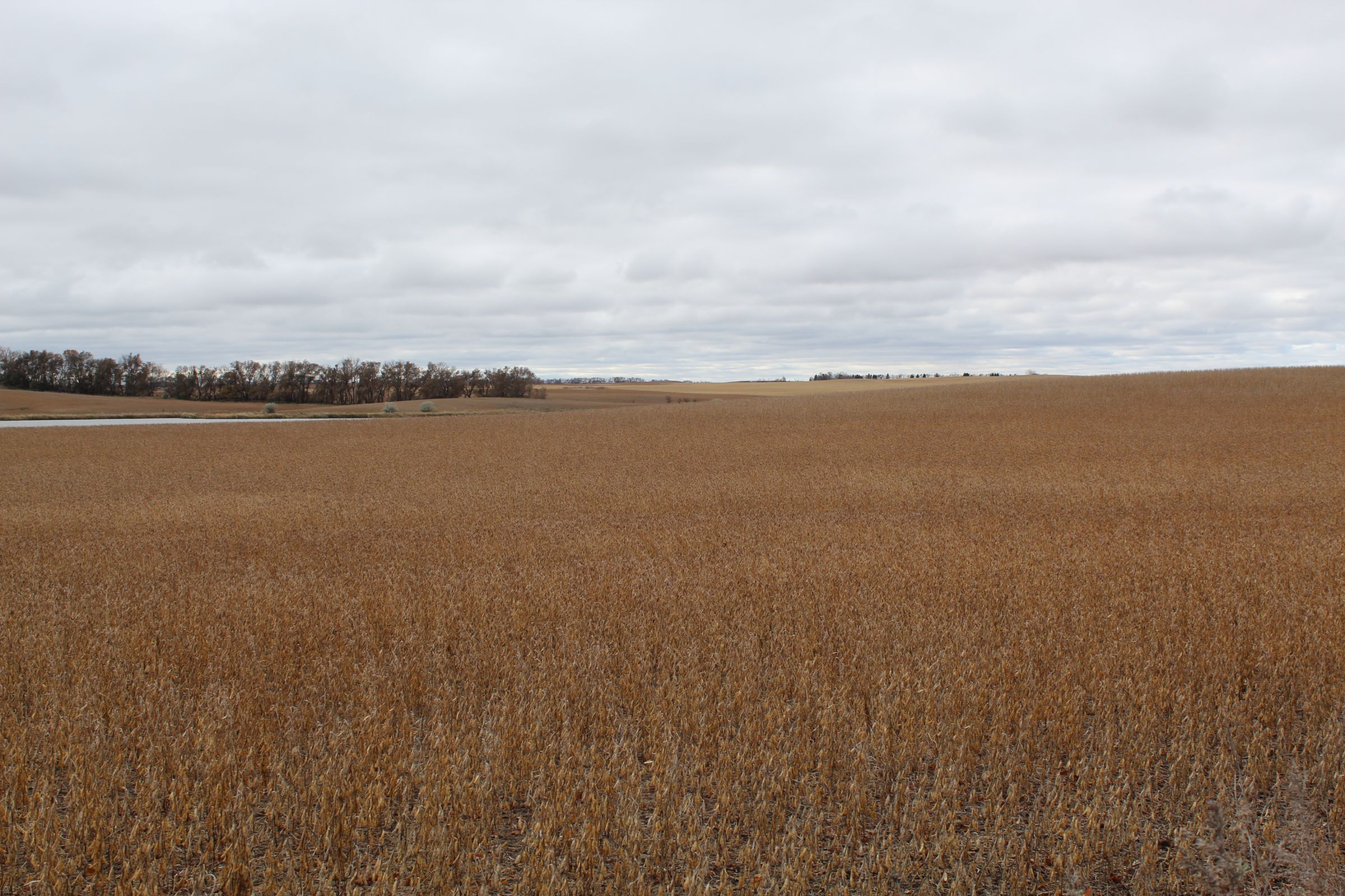 stutsman-county-north-dakota-312-acres-listing-number-15116-2-2020-08-12-141906.JPG