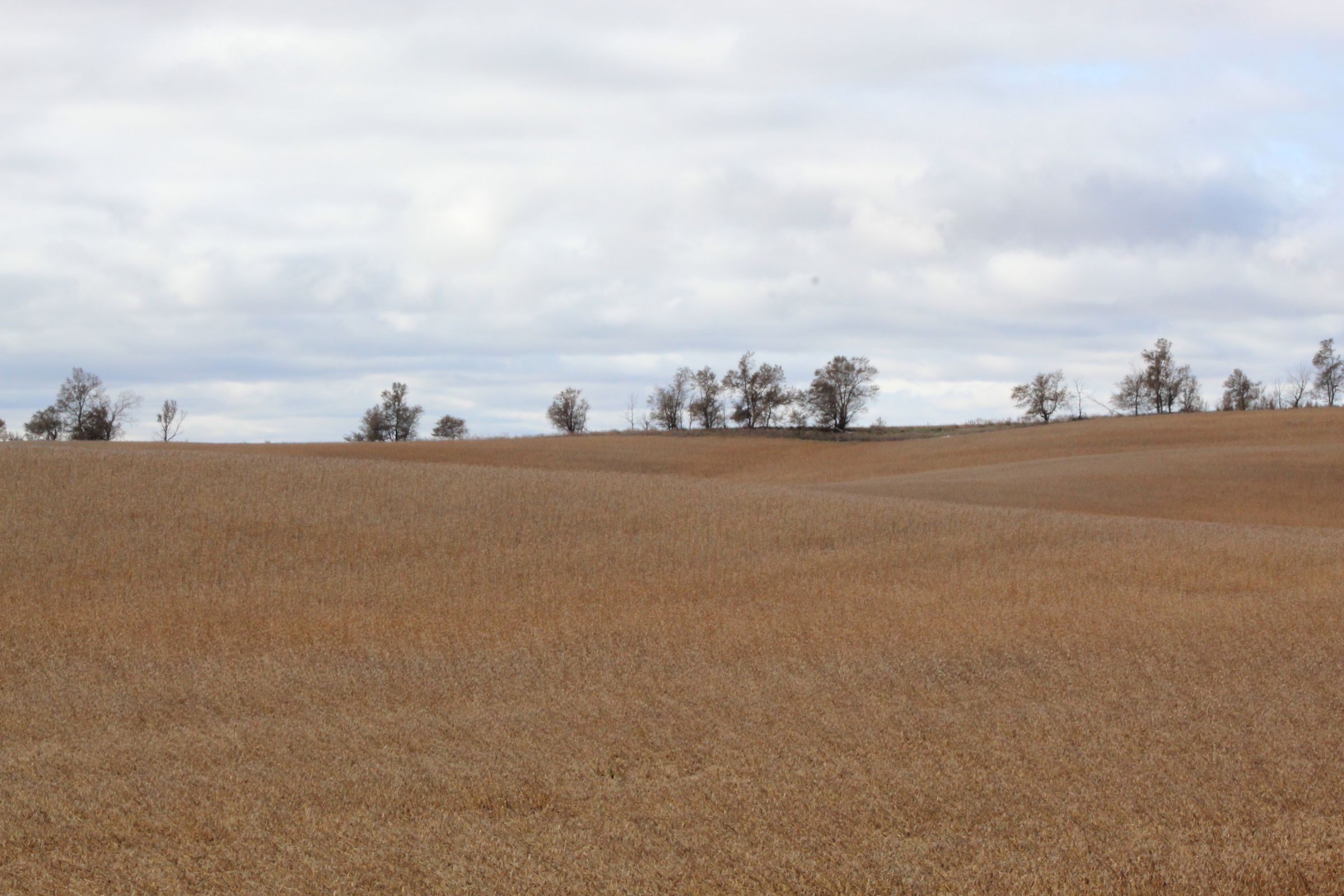 stutsman-county-north-dakota-312-acres-listing-number-15116-4-2020-08-12-141908.JPG
