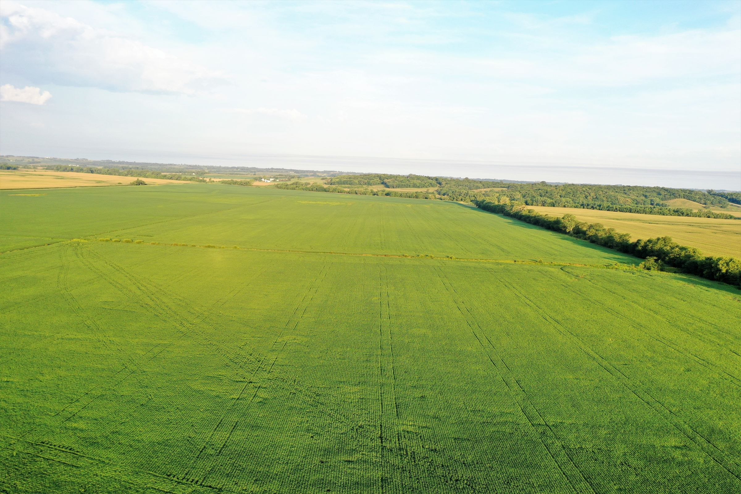 land-page-county-iowa-160-acres-listing-number-15117-0-2020-08-13-175511.jpg