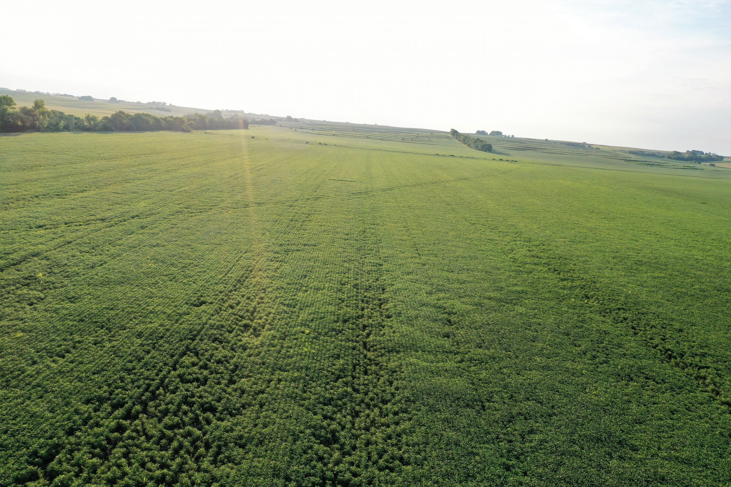 land-page-county-iowa-160-acres-listing-number-15117-1-2020-08-13-175513.jpg