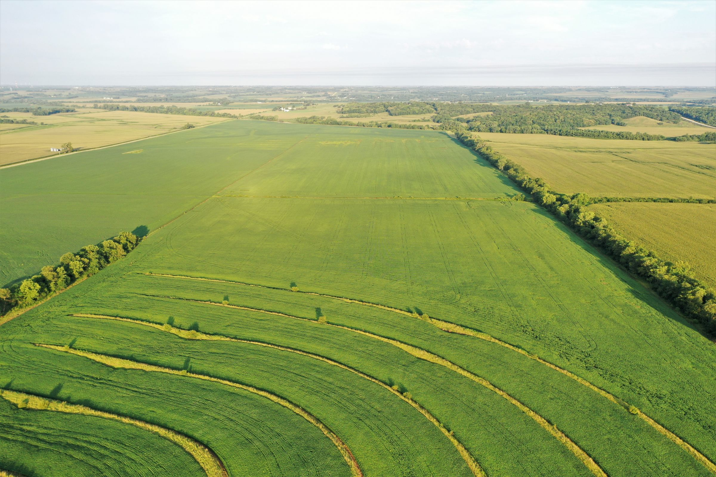 land-page-county-iowa-160-acres-listing-number-15117-3-2020-08-13-162606.jpg