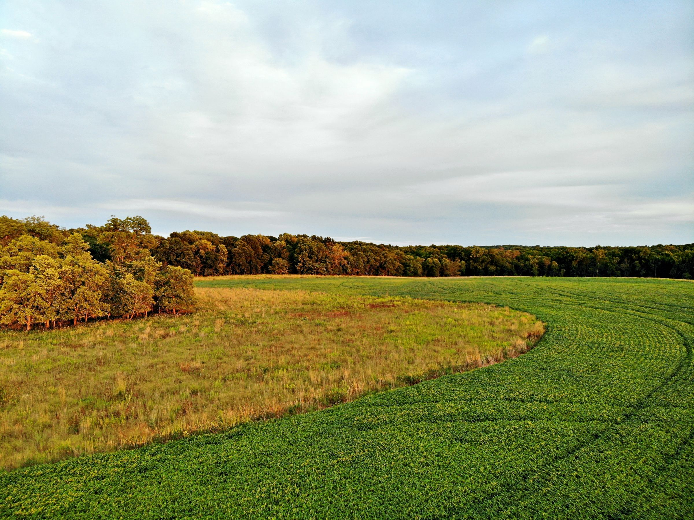 land-madison-county-iowa-123-acres-listing-number-15122-0-2020-08-24-022514.jpg