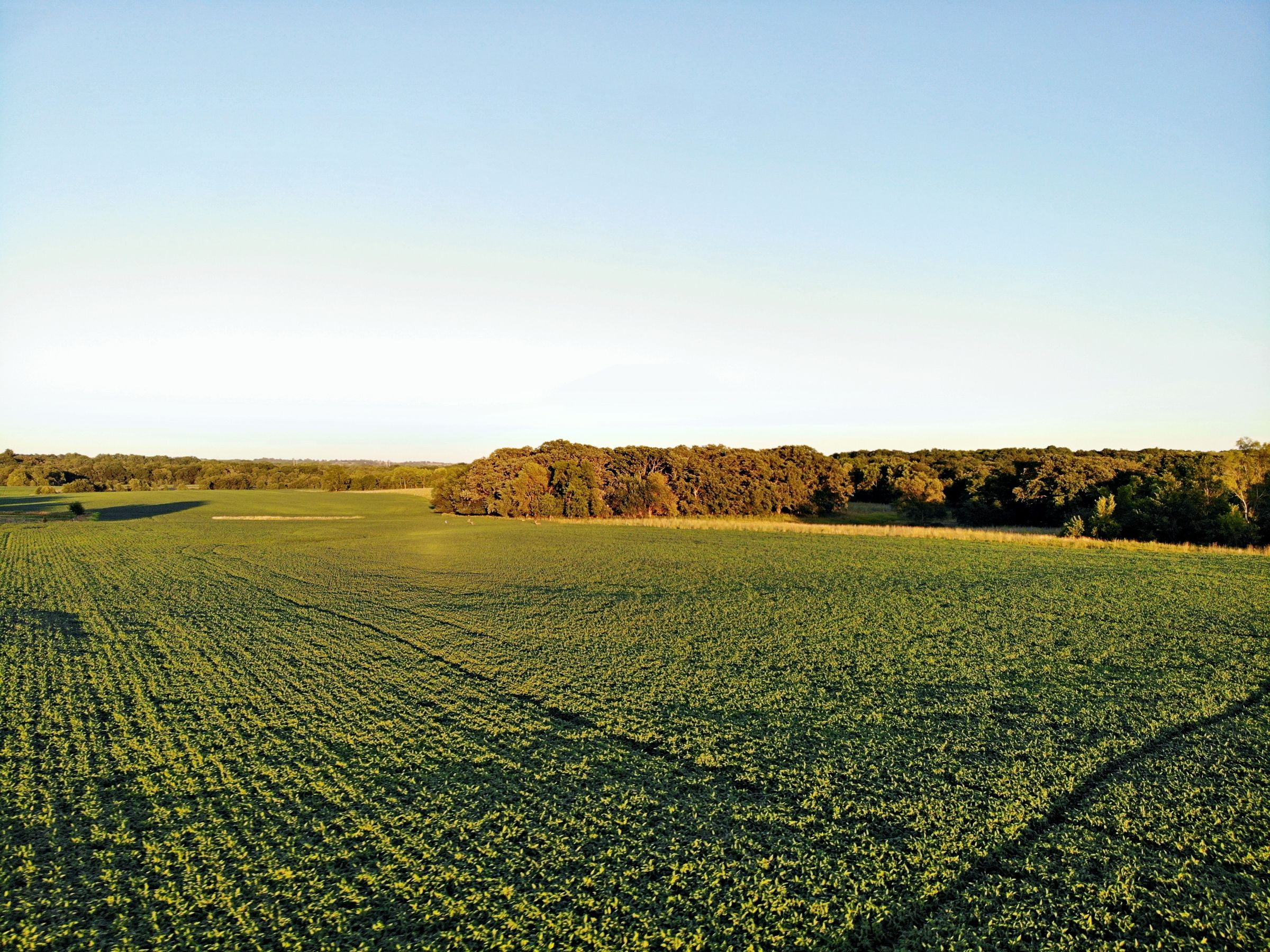 land-madison-county-iowa-123-acres-listing-number-15122-2-2020-08-24-022516.jpg