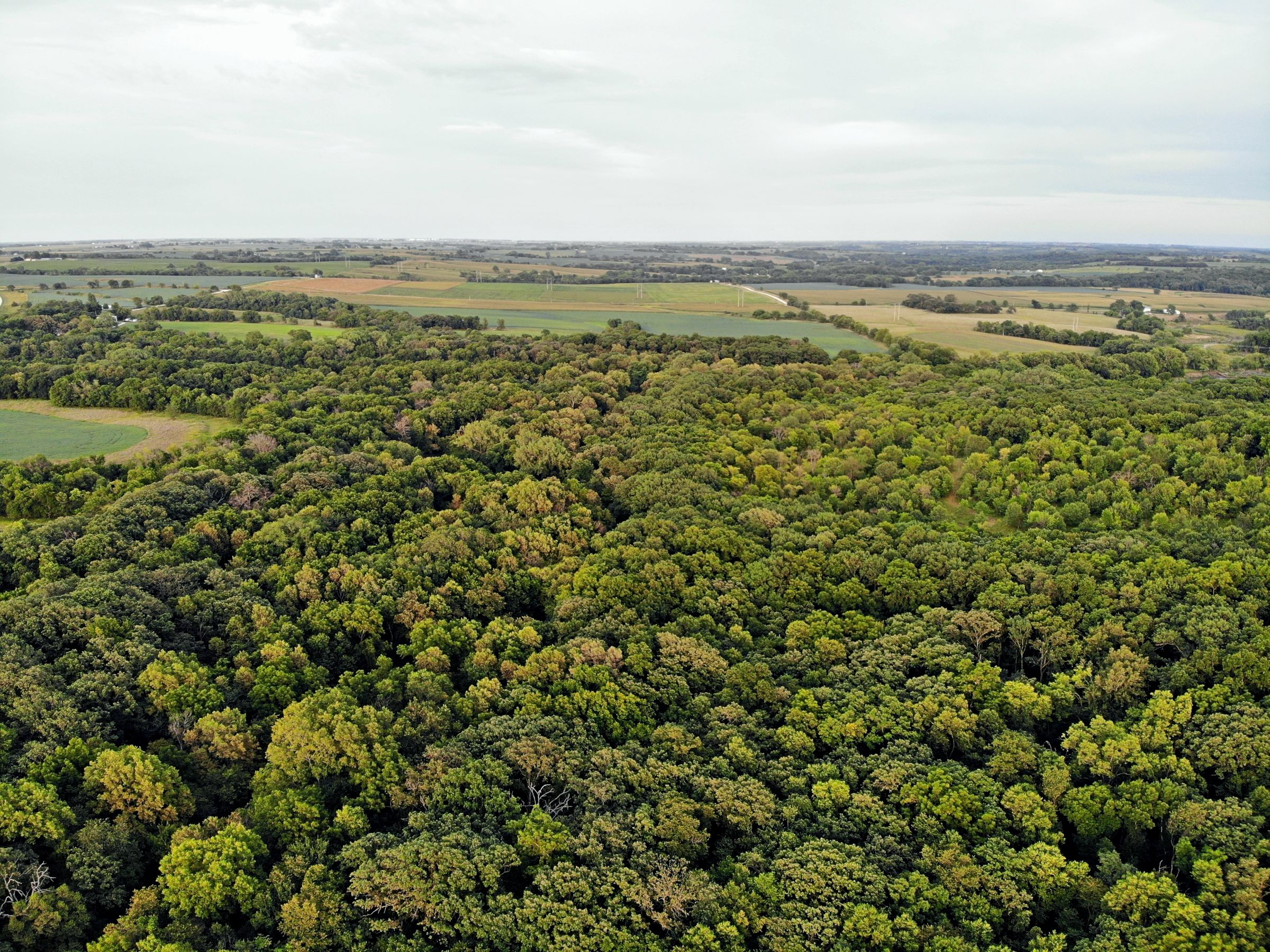 residential-land-madison-county-iowa-106-acres-listing-number-15123-5-2020-08-24-023319.JPG