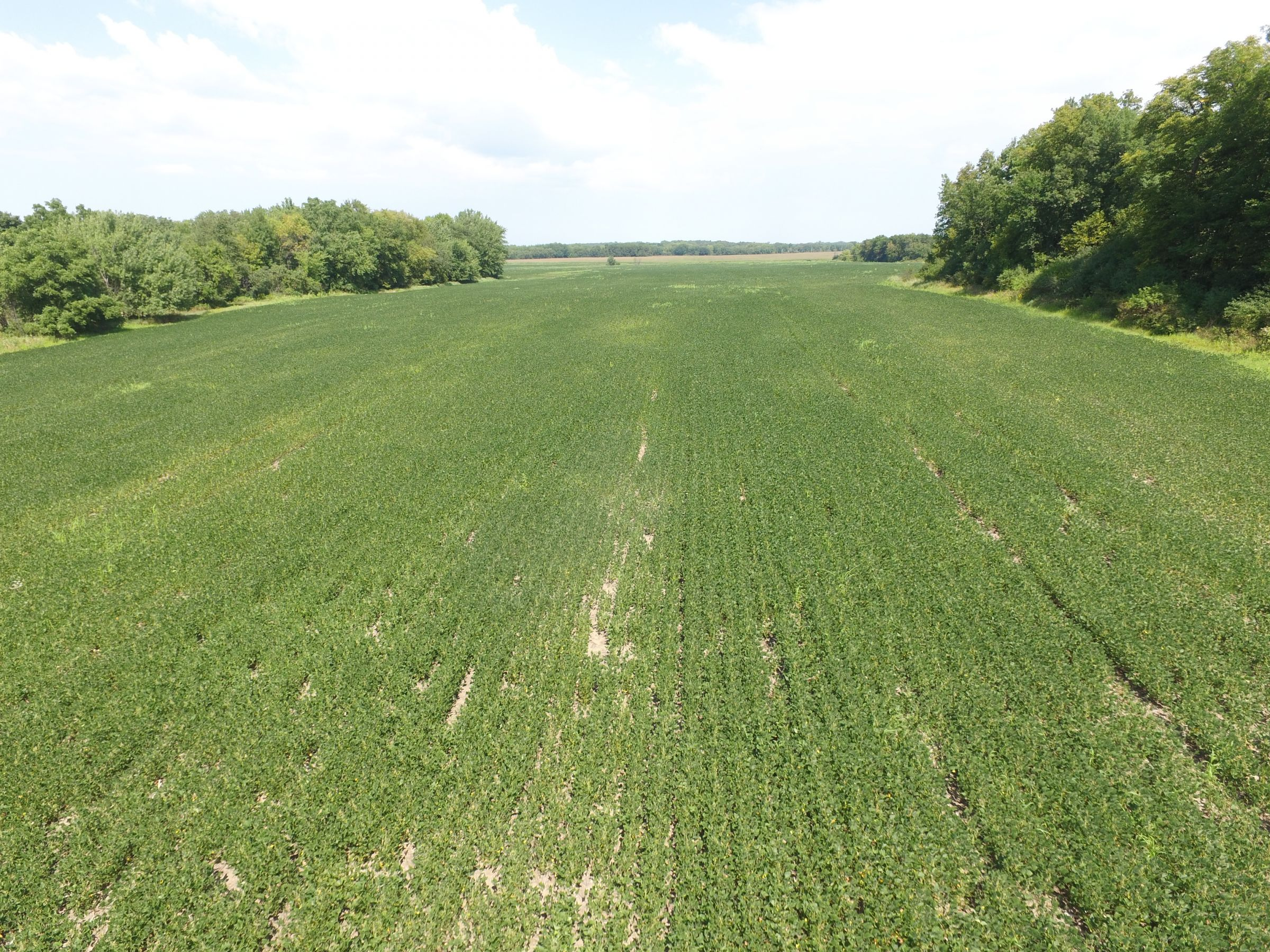 land-chickasaw-county-iowa-78-acres-listing-number-15127-1-2020-09-01-145745.JPG