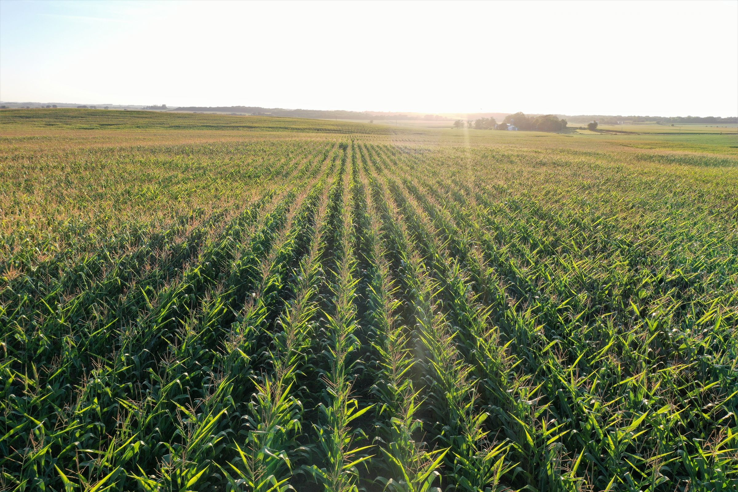 land-butler-county-iowa-157-acres-listing-number-15128-0-2020-08-20-212004.jpg