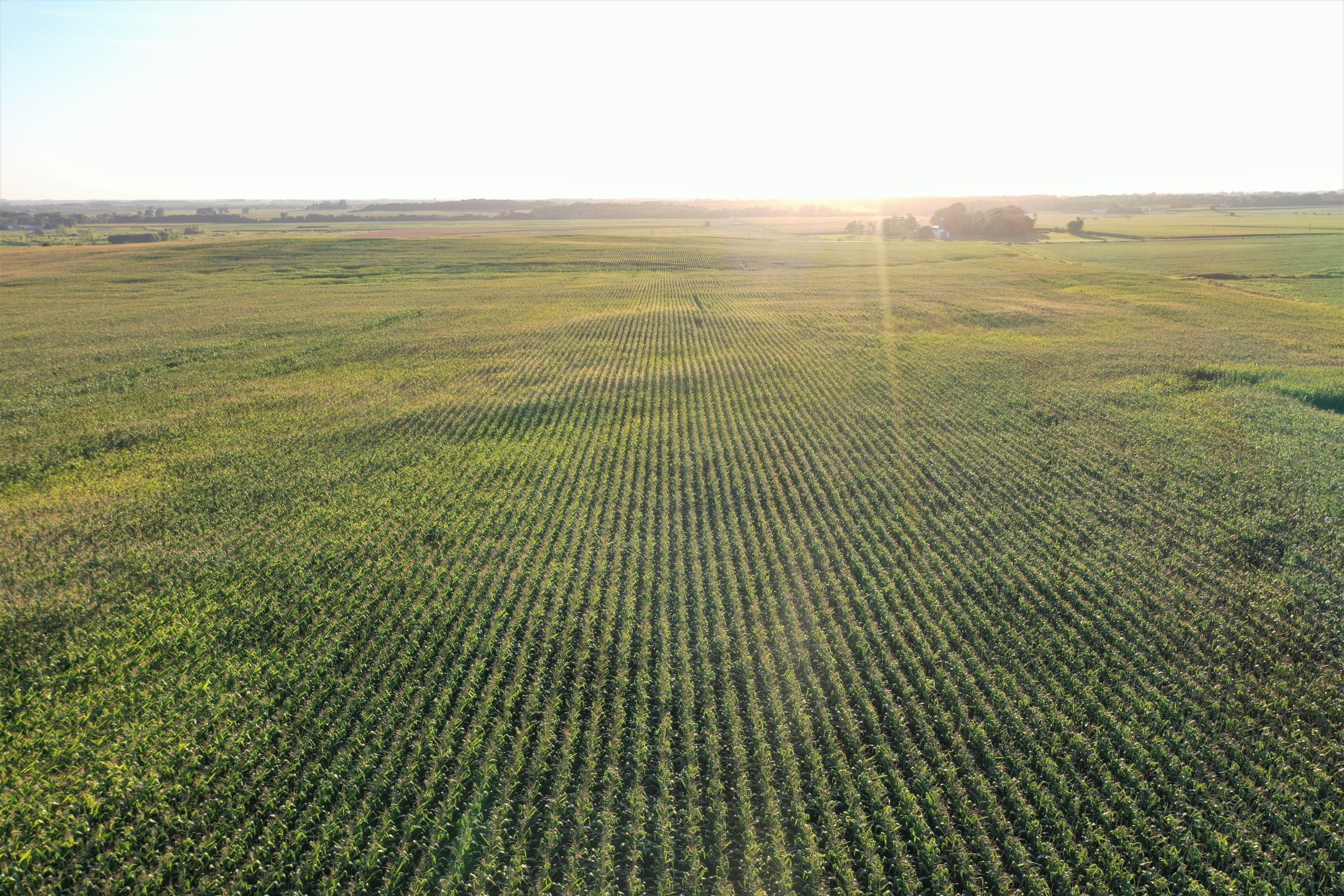 land-butler-county-iowa-157-acres-listing-number-15128-2-2020-08-20-212008.jpg