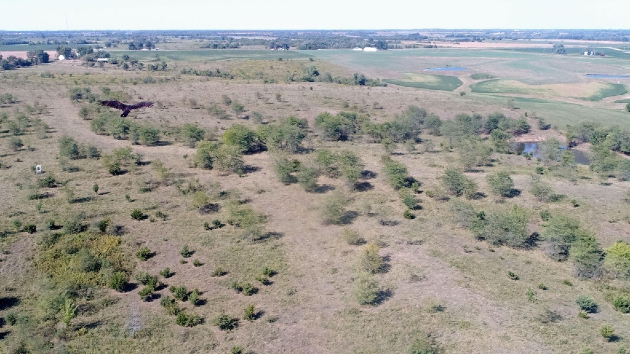 land-lucas-county-iowa-106-acres-listing-number-15133-1-2020-09-04-182129.JPG