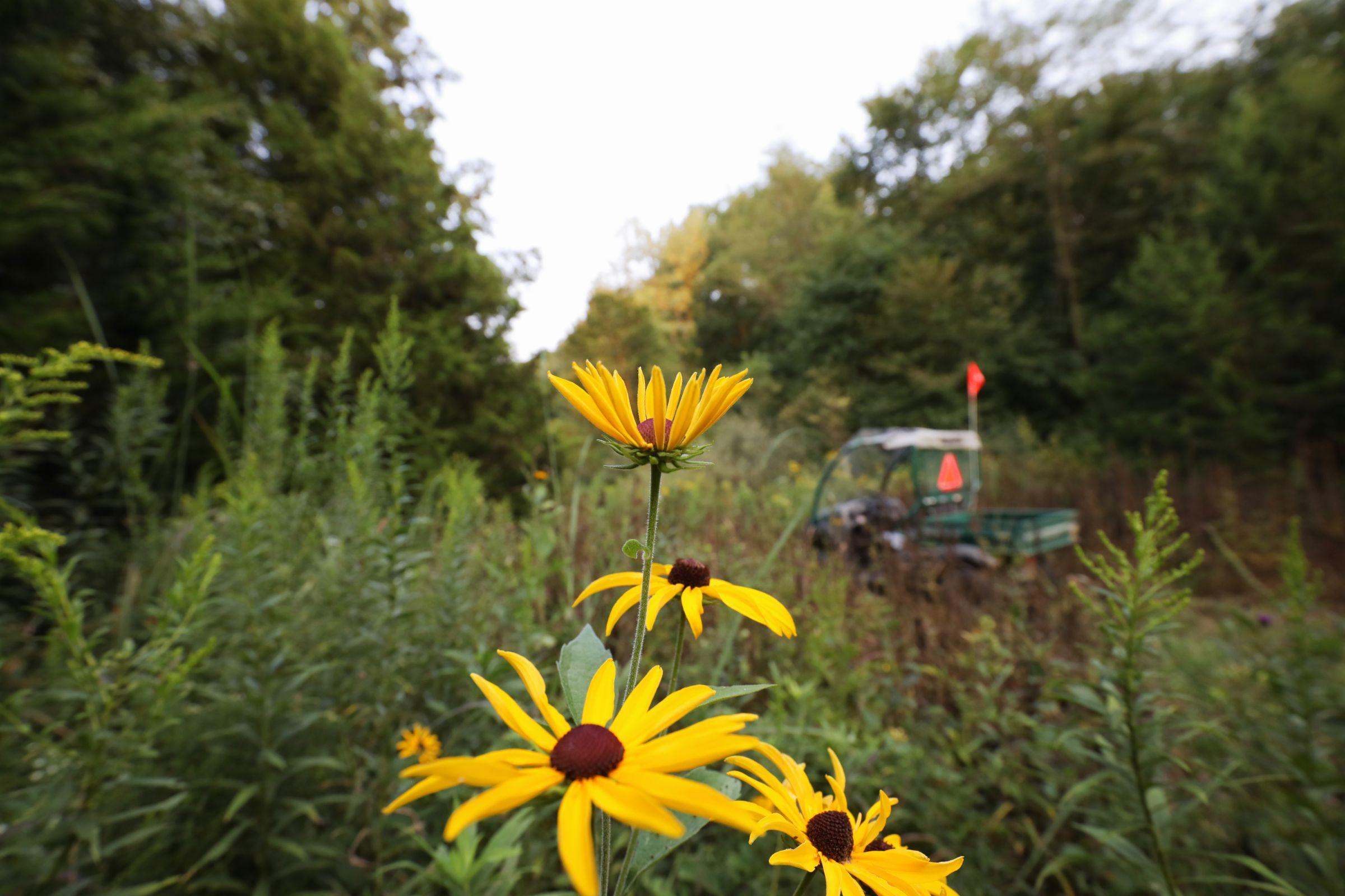 land-lee-county-iowa-328-acres-listing-number-15137-0-2020-08-27-174847.jpg