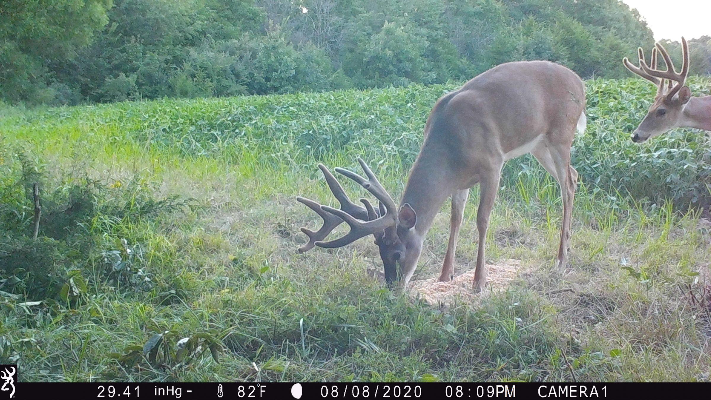 land-lee-county-iowa-328-acres-listing-number-15137-0-2020-08-27-175654.JPG