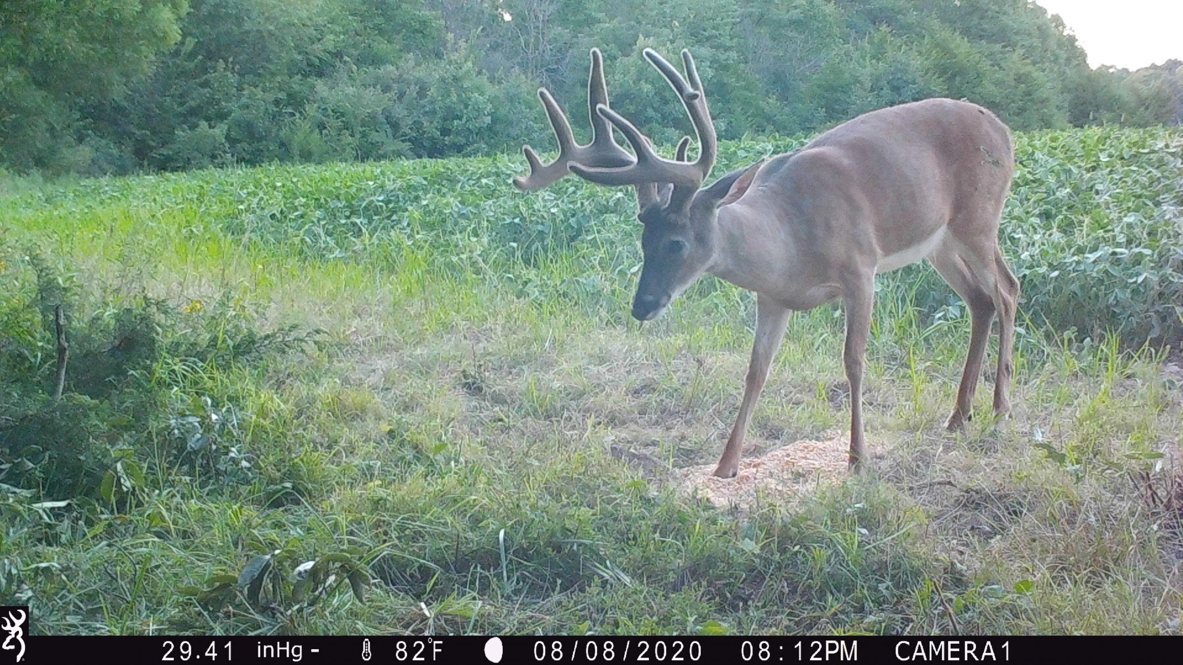 land-lee-county-iowa-328-acres-listing-number-15137-1-2020-08-27-175656.JPG