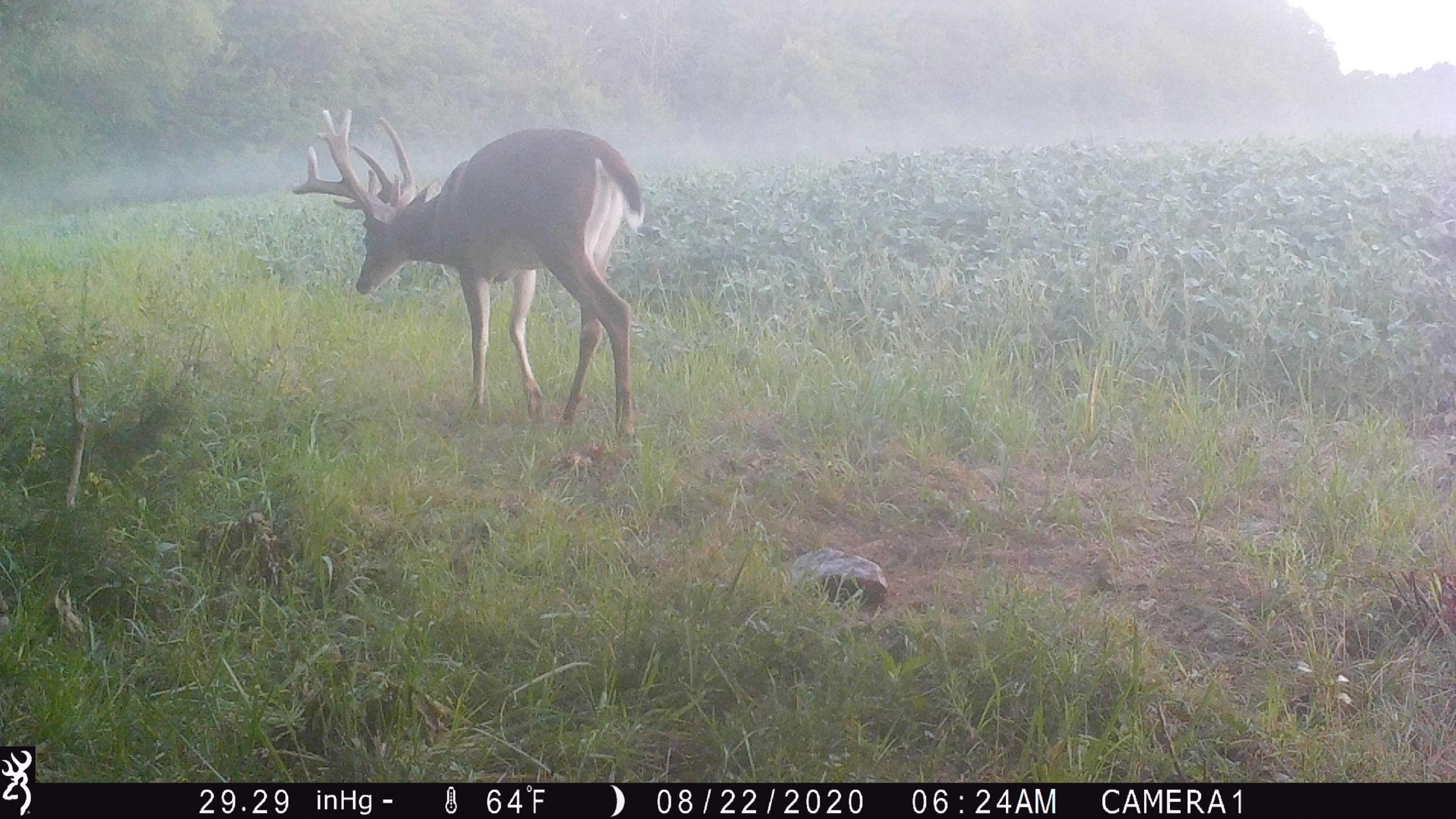 land-lee-county-iowa-328-acres-listing-number-15137-10-2020-08-27-175707.JPG