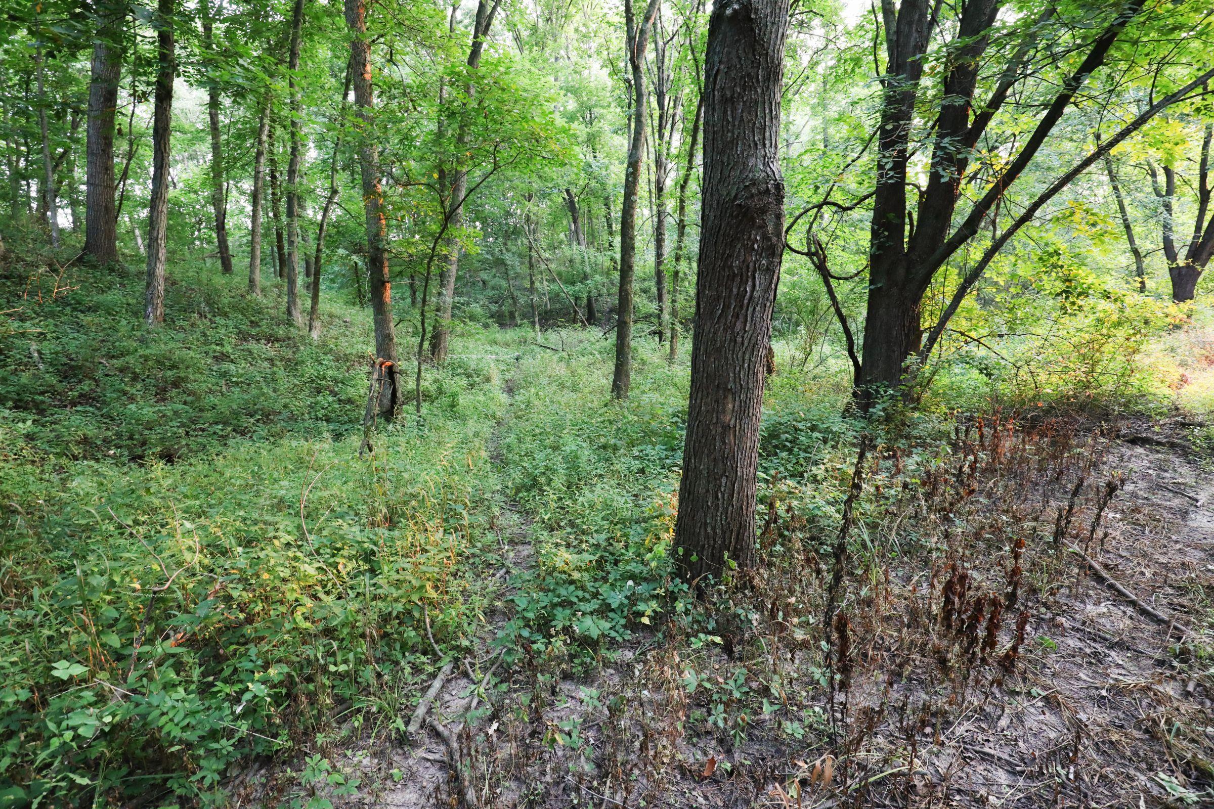 land-lee-county-iowa-328-acres-listing-number-15137-2-2020-08-27-174851.jpg