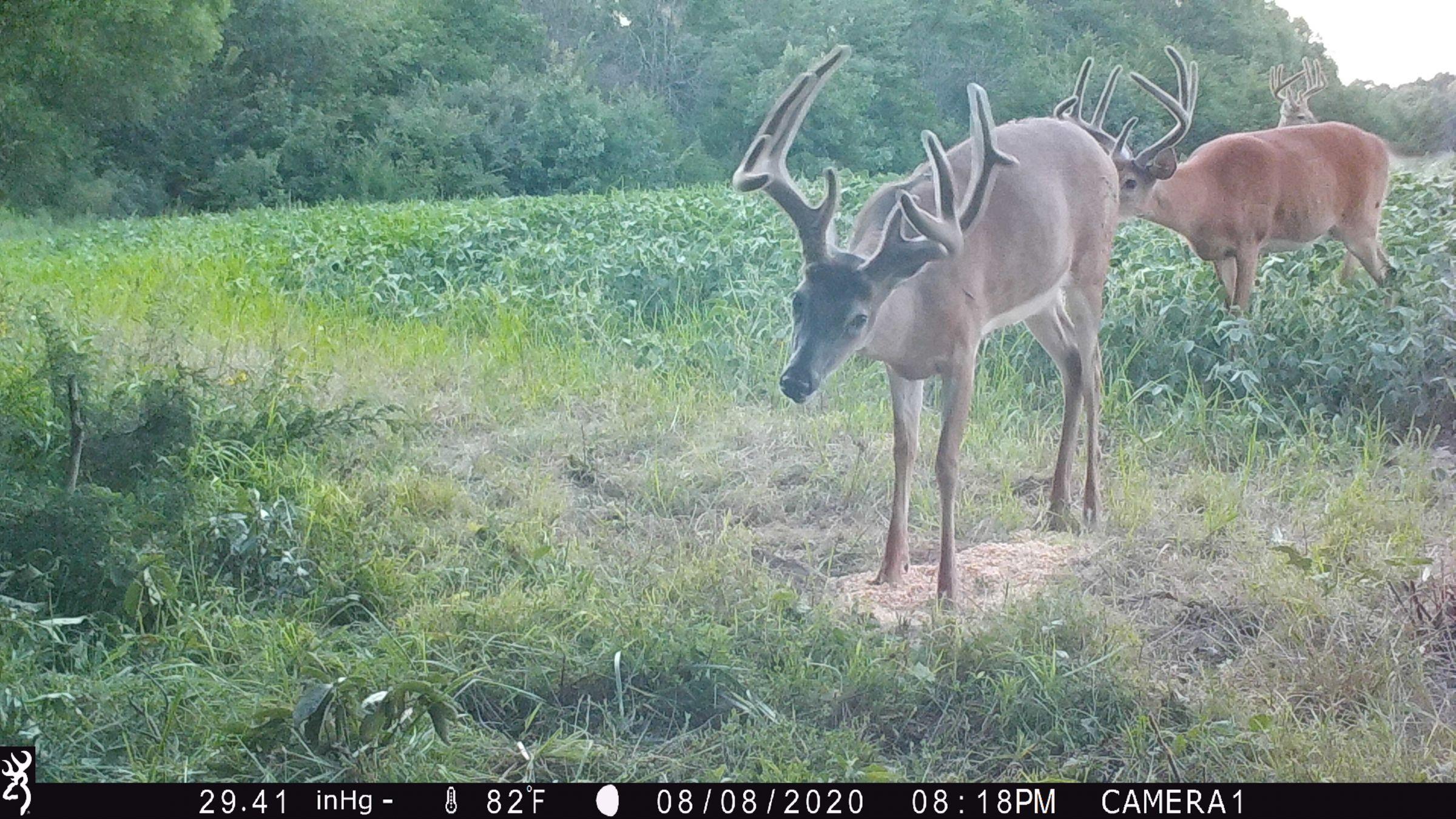 land-lee-county-iowa-328-acres-listing-number-15137-2-2020-08-27-175657.JPG