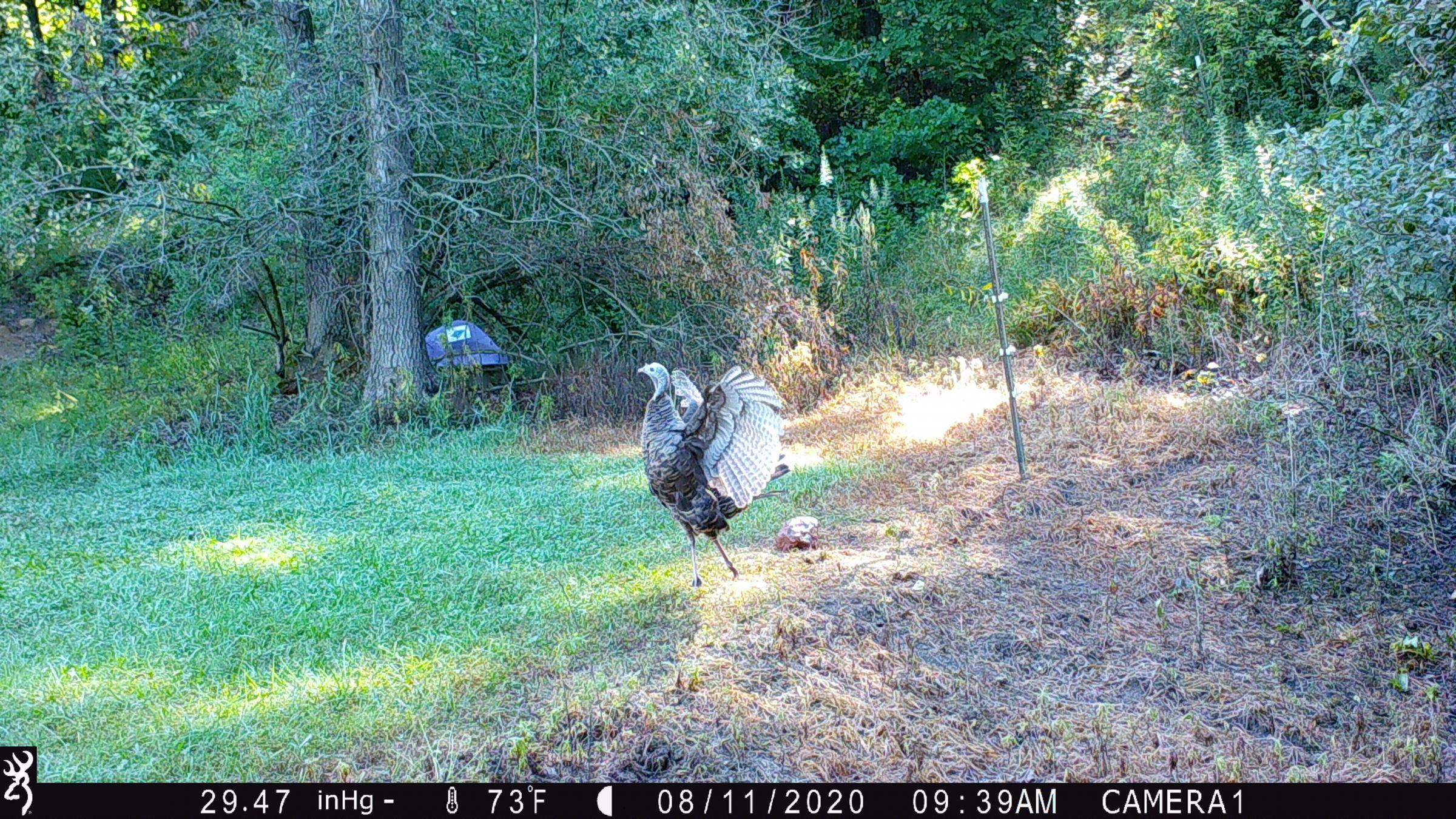 land-lee-county-iowa-328-acres-listing-number-15137-3-2020-08-27-175658.JPG