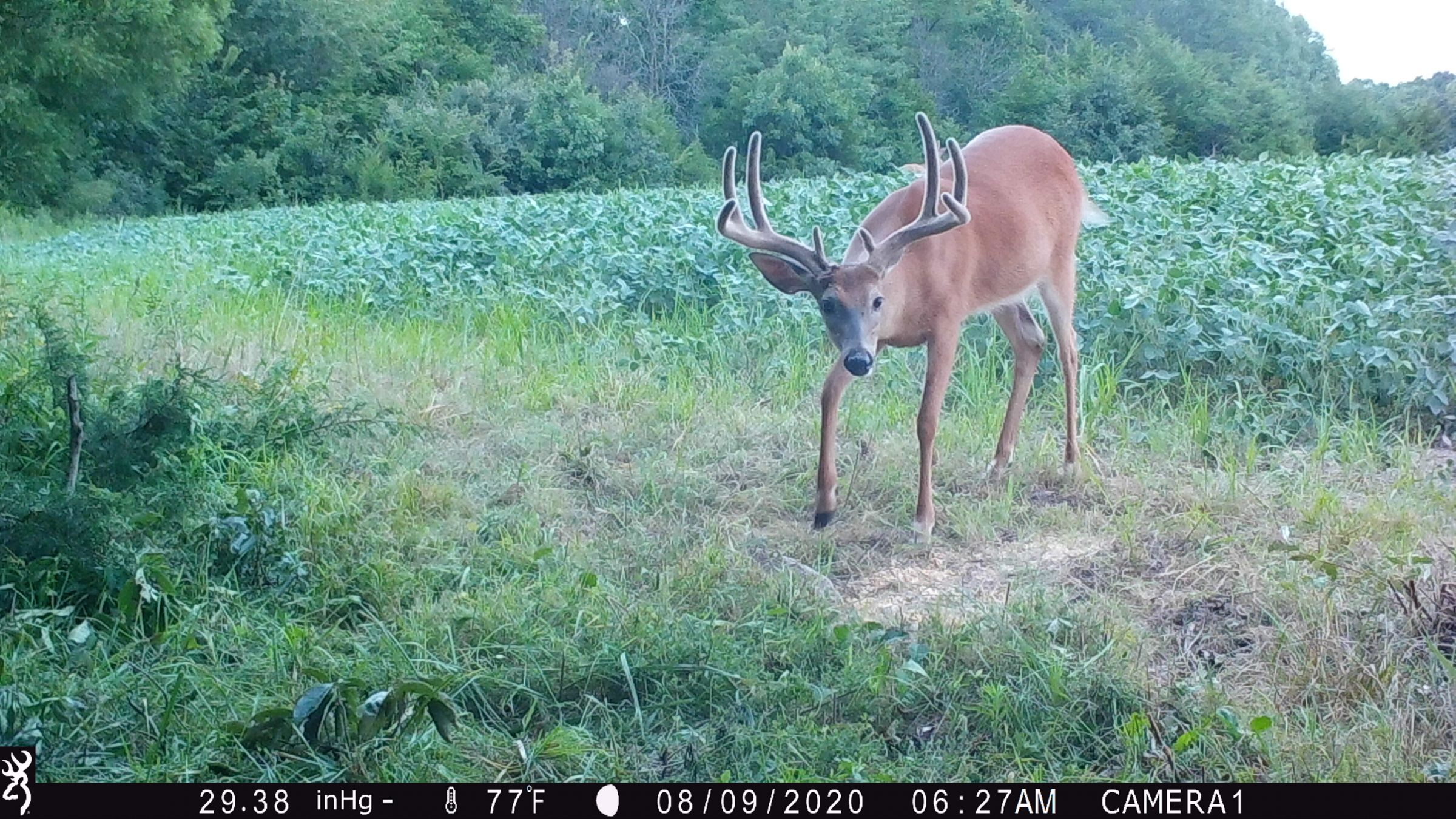 land-lee-county-iowa-328-acres-listing-number-15137-4-2020-08-27-175659.JPG