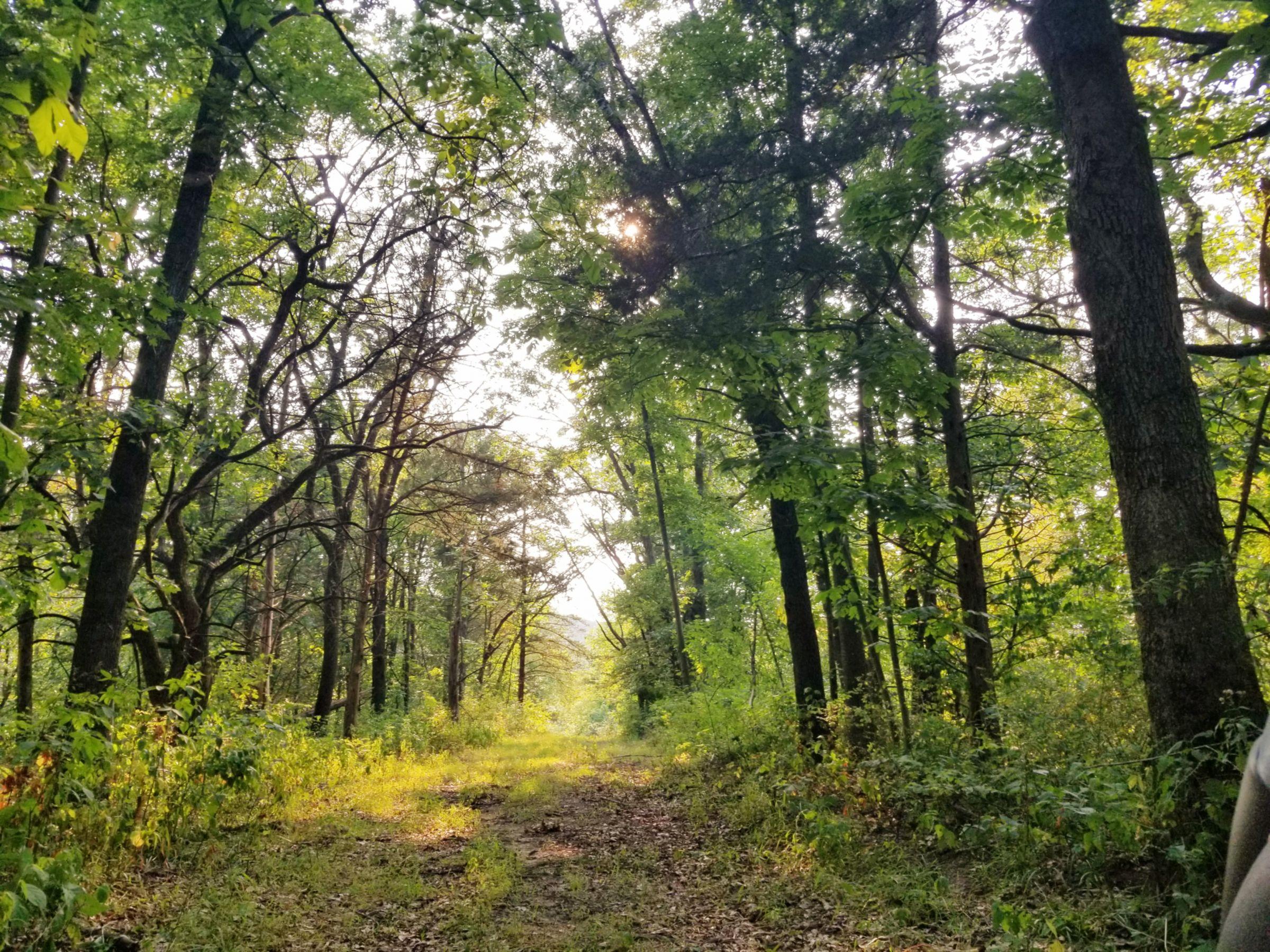 land-lee-county-iowa-328-acres-listing-number-15137-5-2020-08-27-174857.jpg